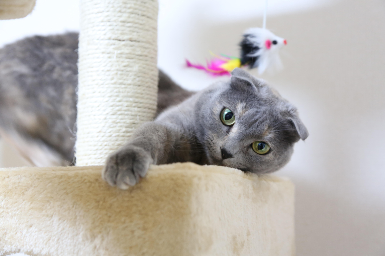 Free kitten whiskers vertebrate domestic cat british