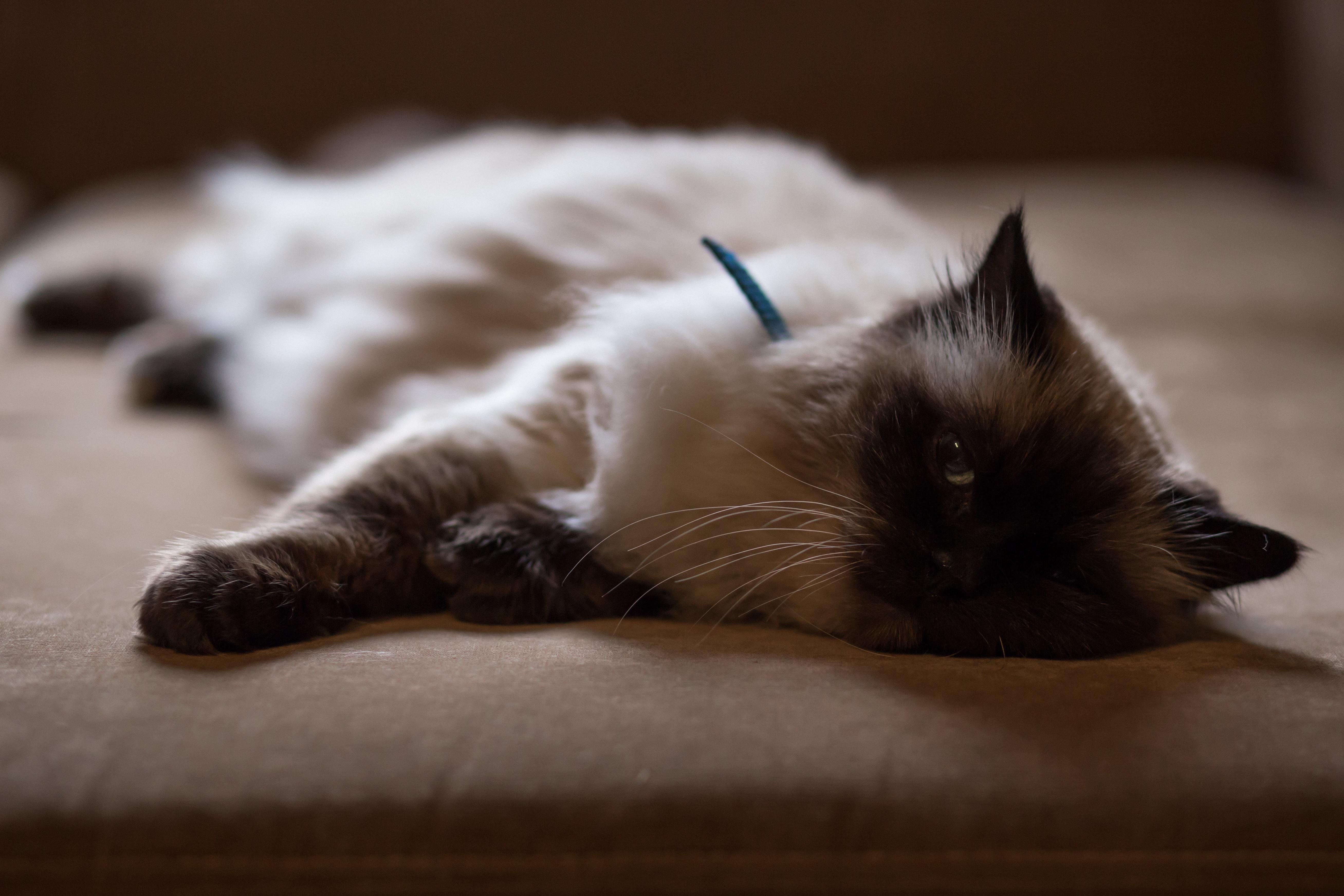 contech stayaway motion activated pet deterrent australia