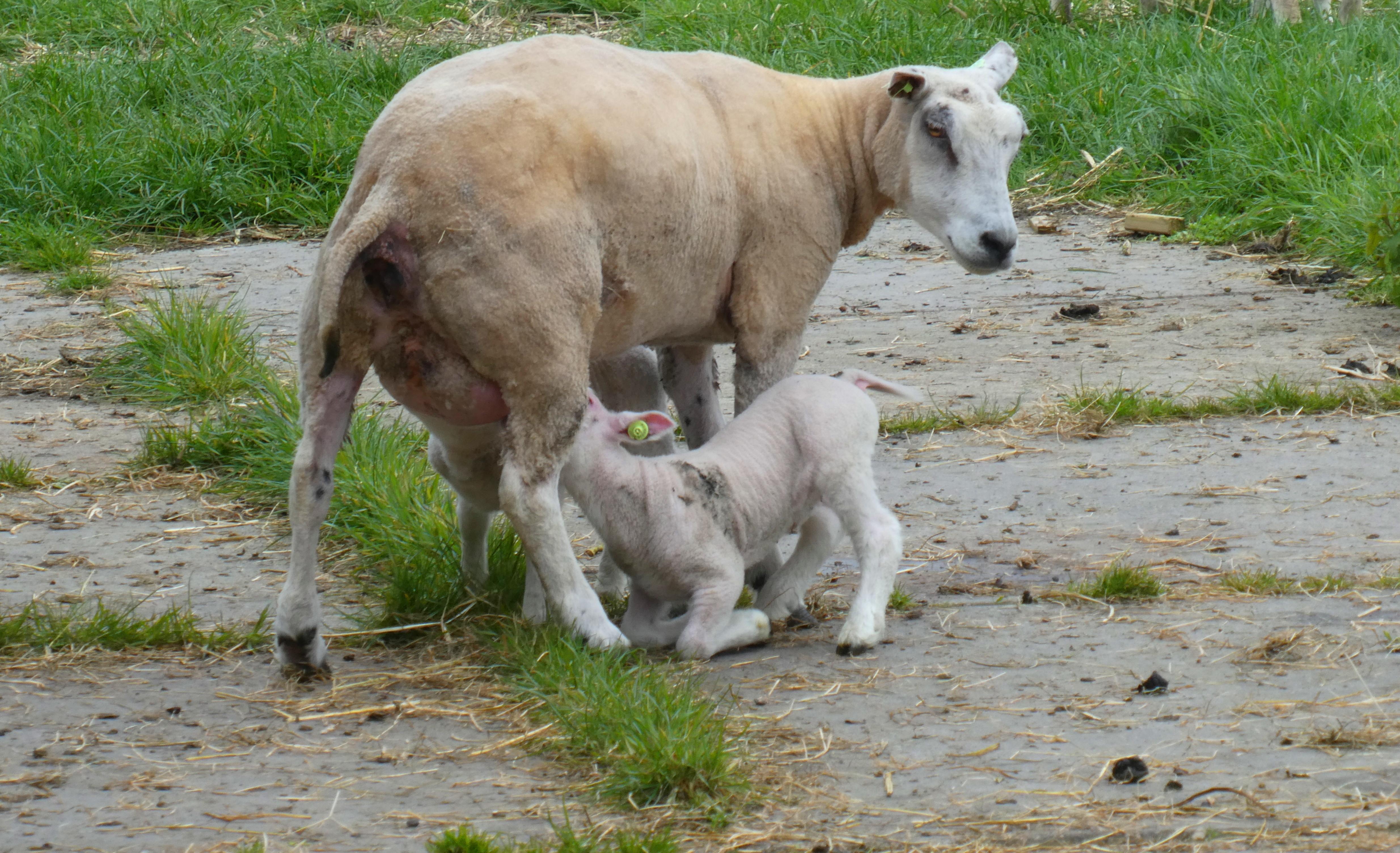 25+ Gambar hewan mamalia darat terbaru