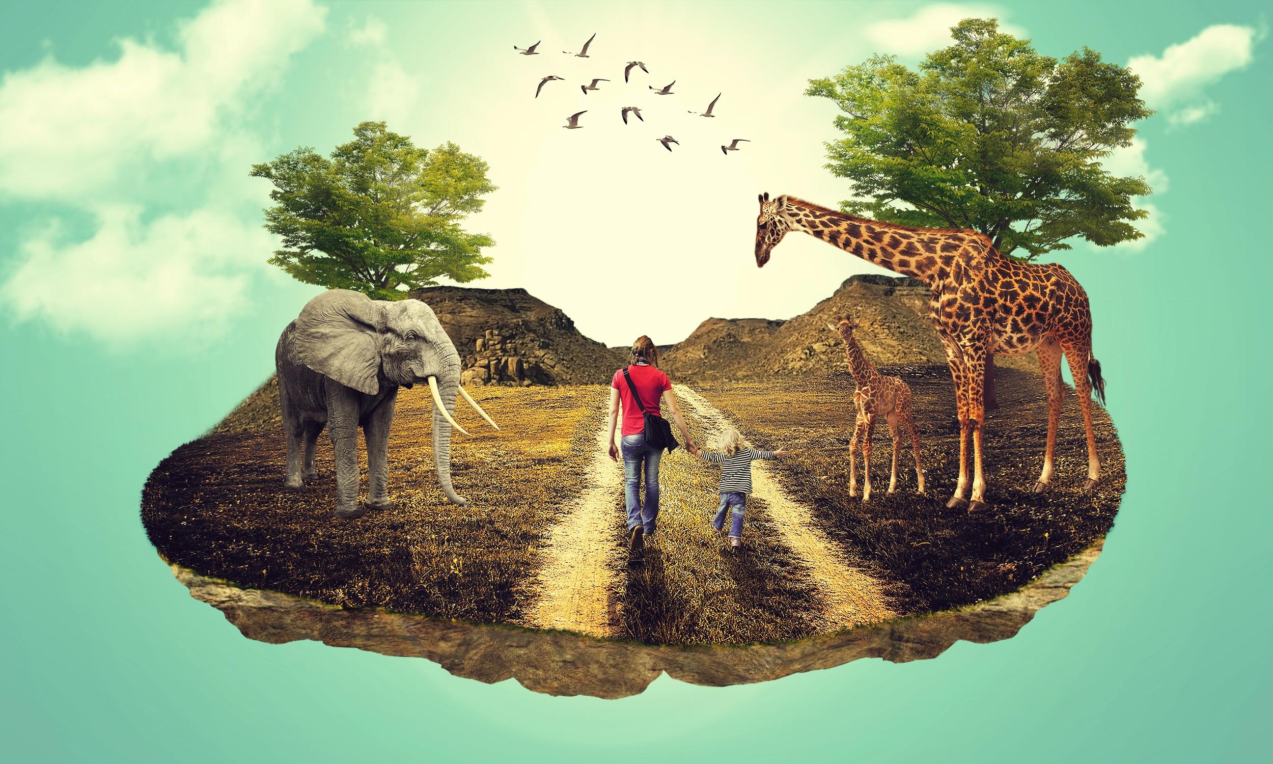 120 Gambar Ilustrasi Ekosistem Taman