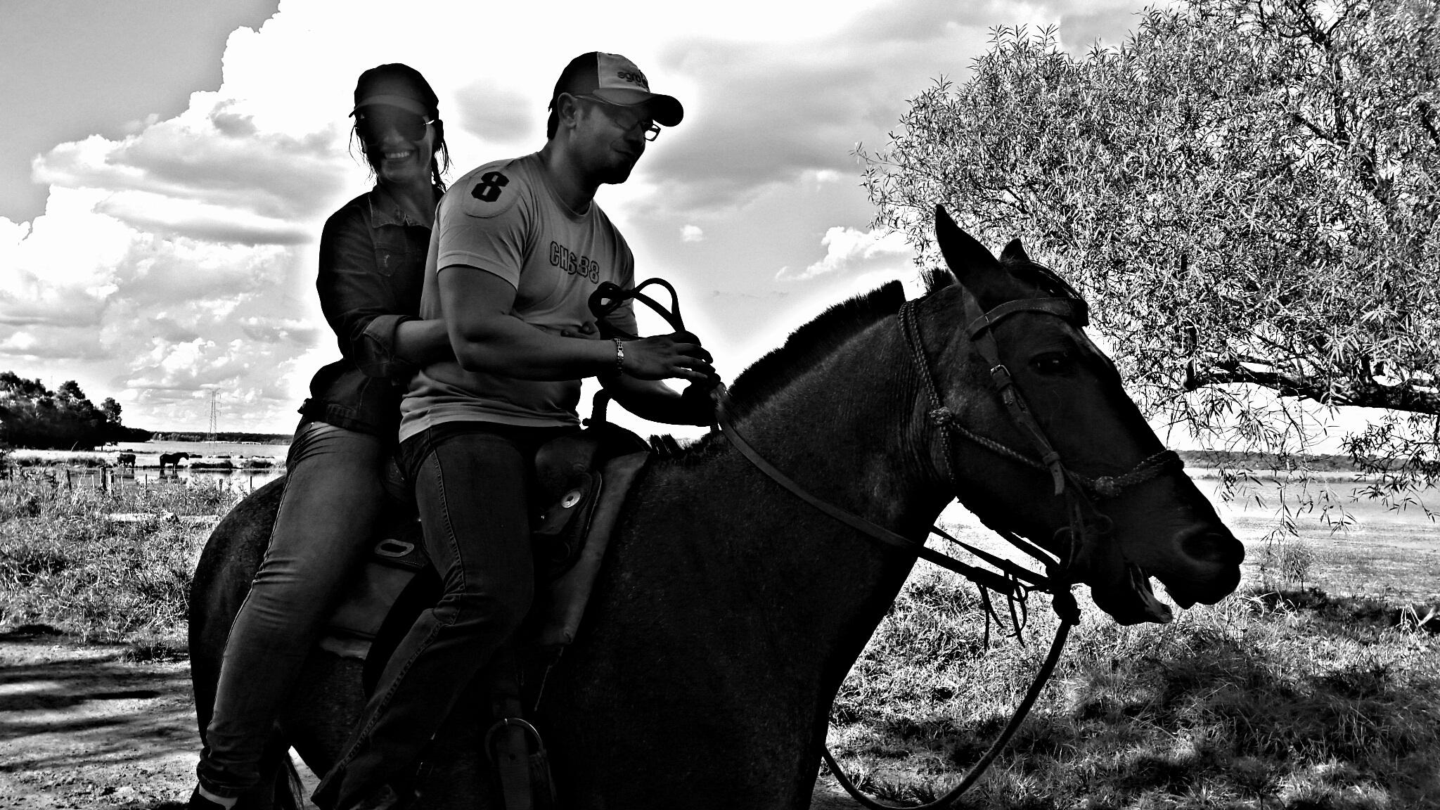 Images Gratuites Paysage Noir Et Blanc Cheval étalon