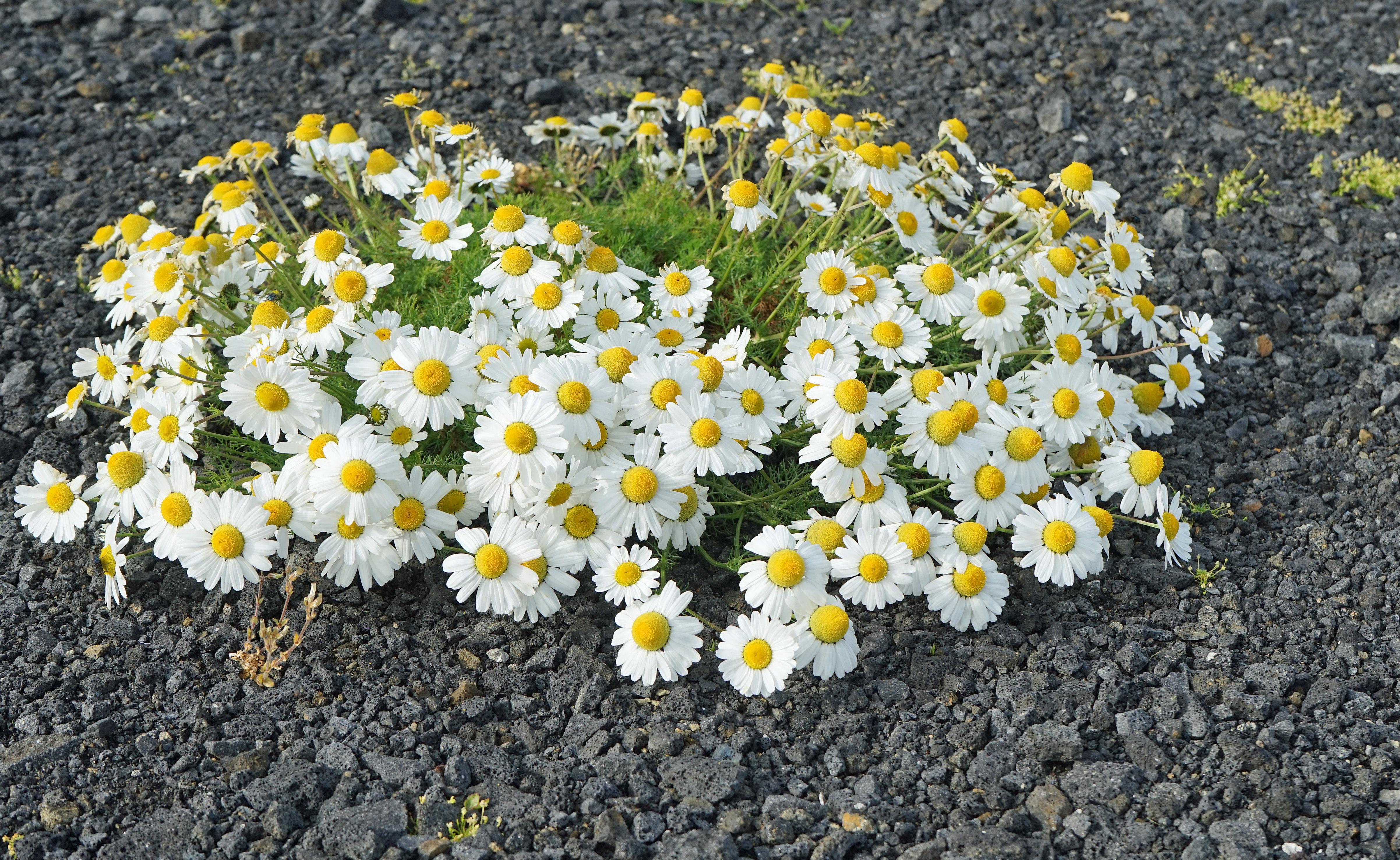 free images landscape blossom field flower bloom botany