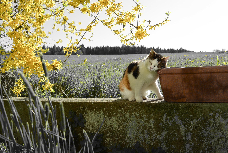 Plan Cul Avec Une Cougar De Toulouse