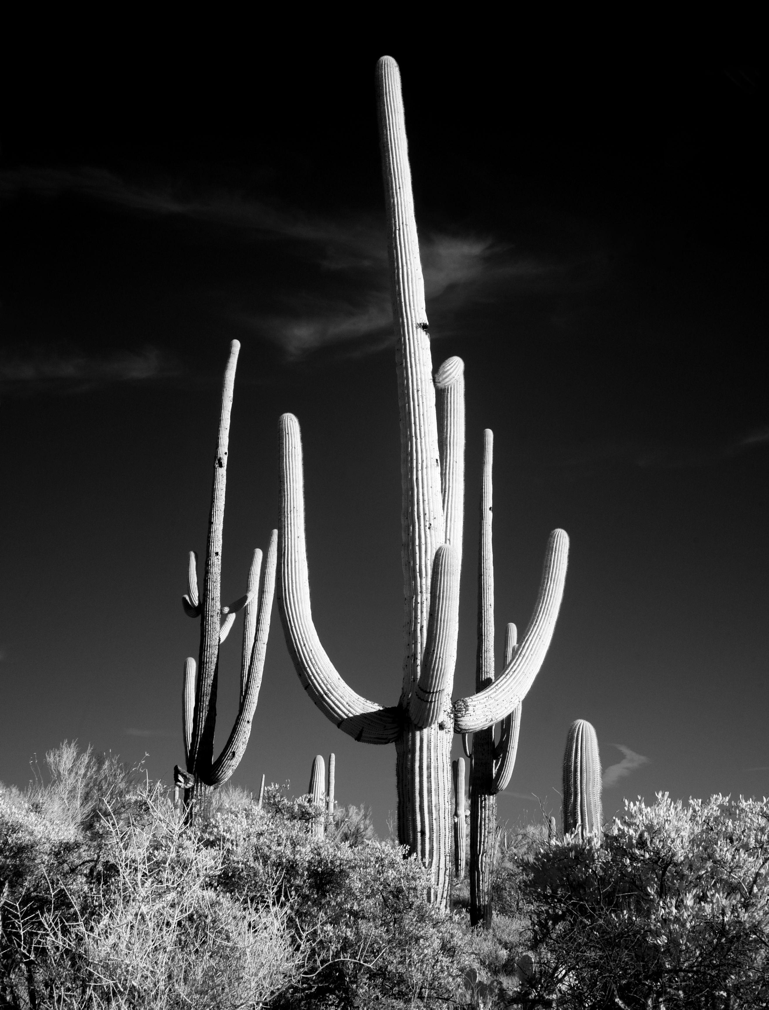 Fotos gratis paisaje cactus en blanco y negro planta fotograf a pradera flor estados - Fotos en blanco ...