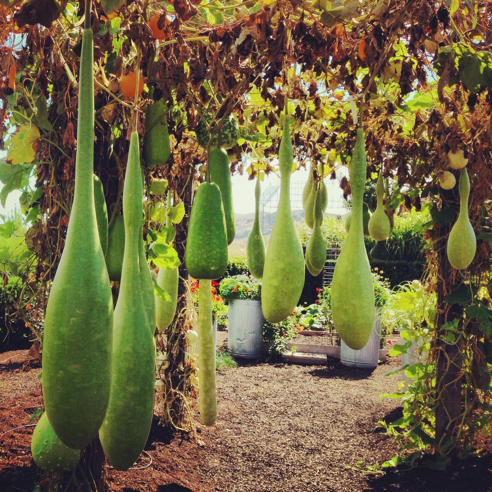 Free Images Landscape Cactus Bloom Summer Food Spring