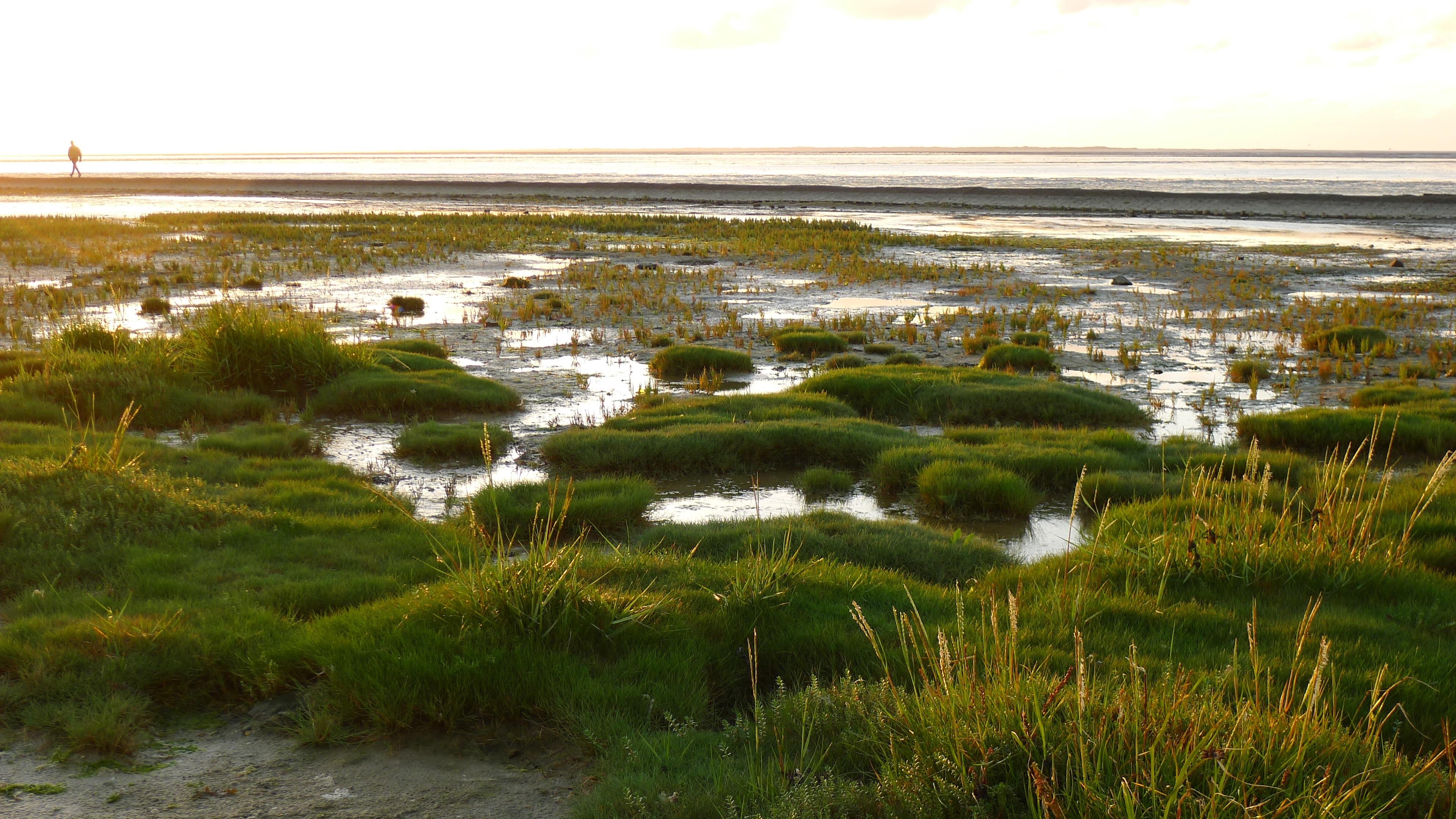 картинка болота в тундре любят