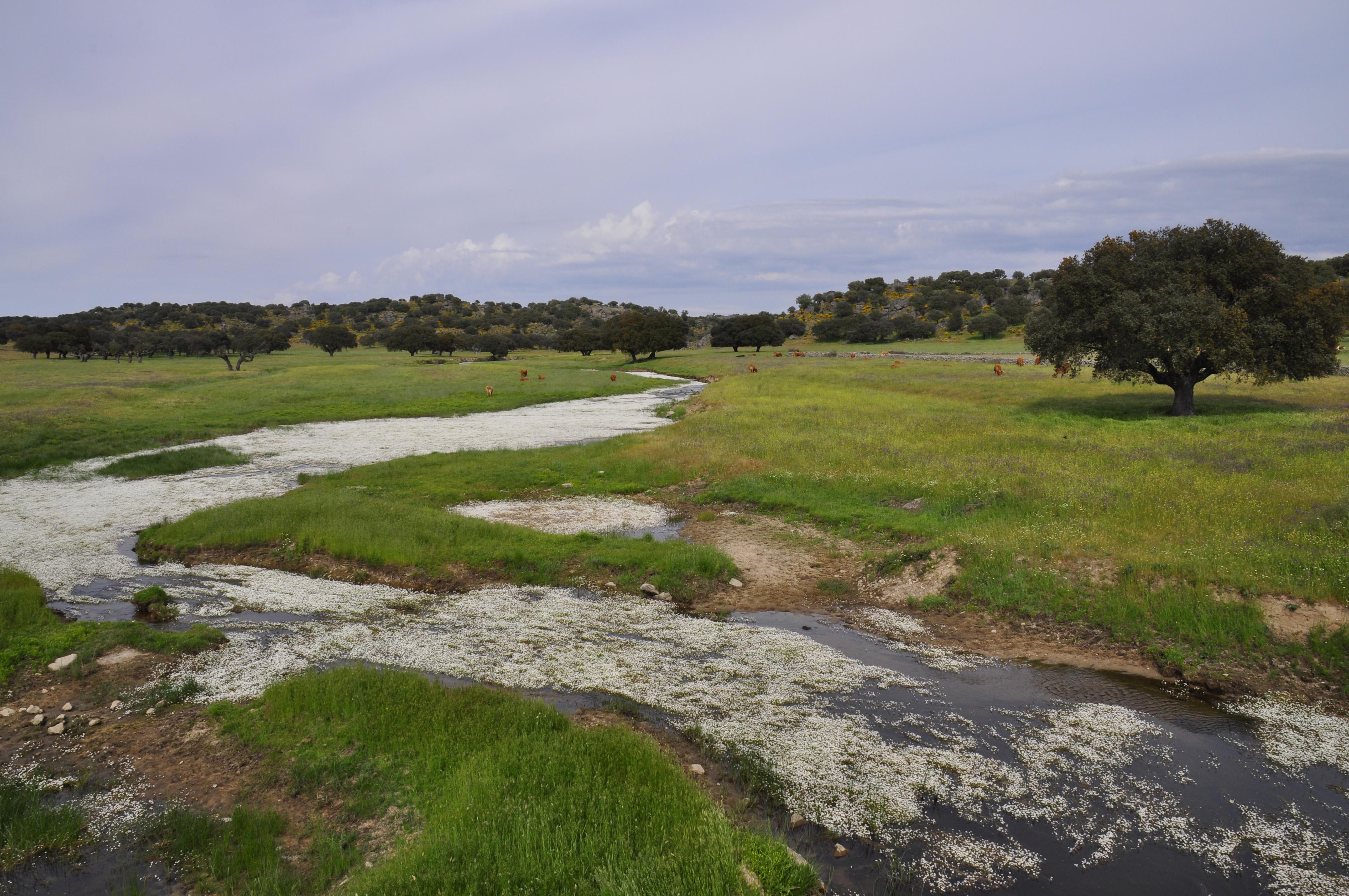 無料画像 : 風景, 海岸, 沼地, ...
