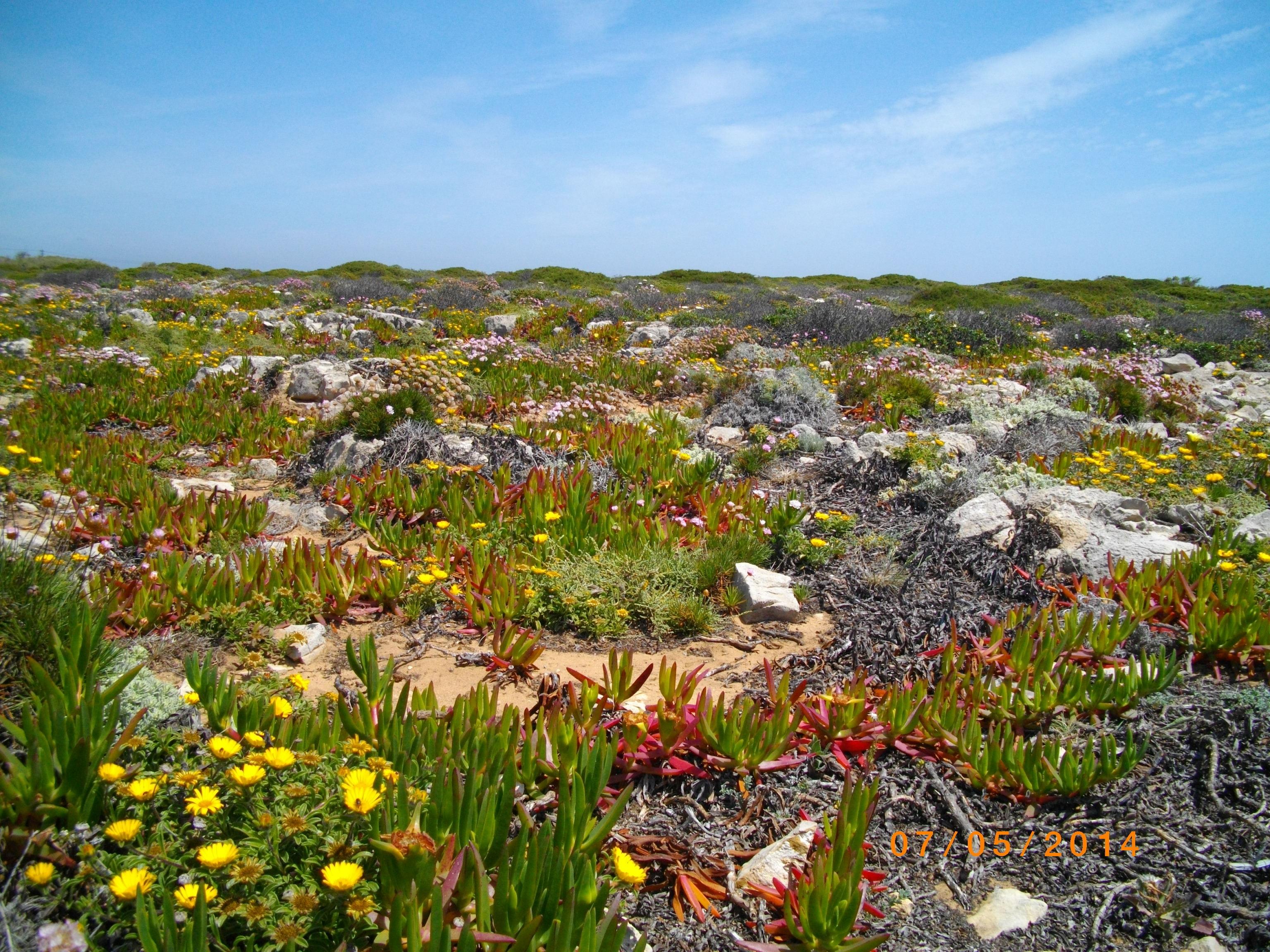 Free Images Landscape Coast Nature Grass Wilderness - Portugal vegetation map