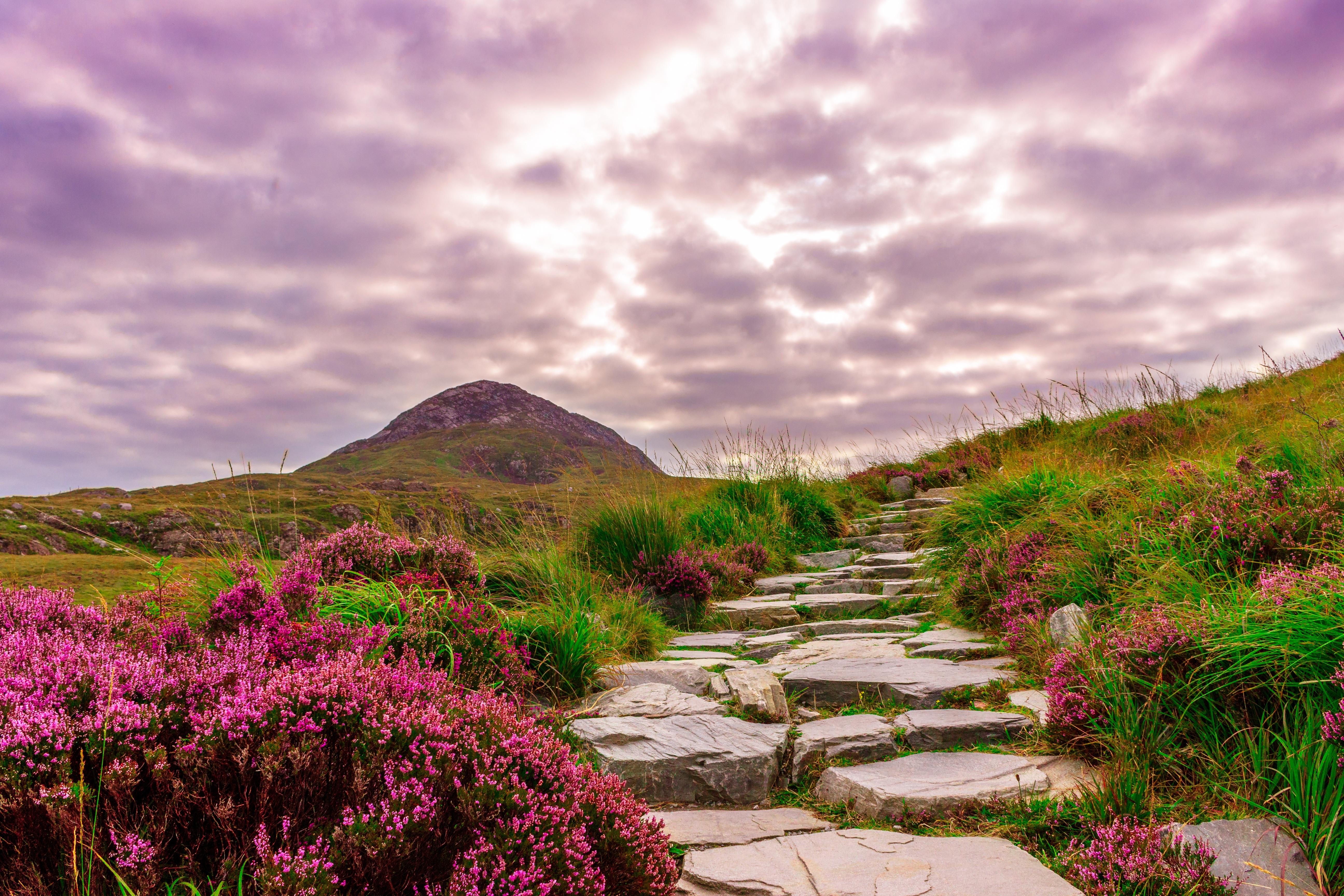 Free Images : landscape, coast, tree, nature, grass, wilderness ... for Flower Park Background  143gtk
