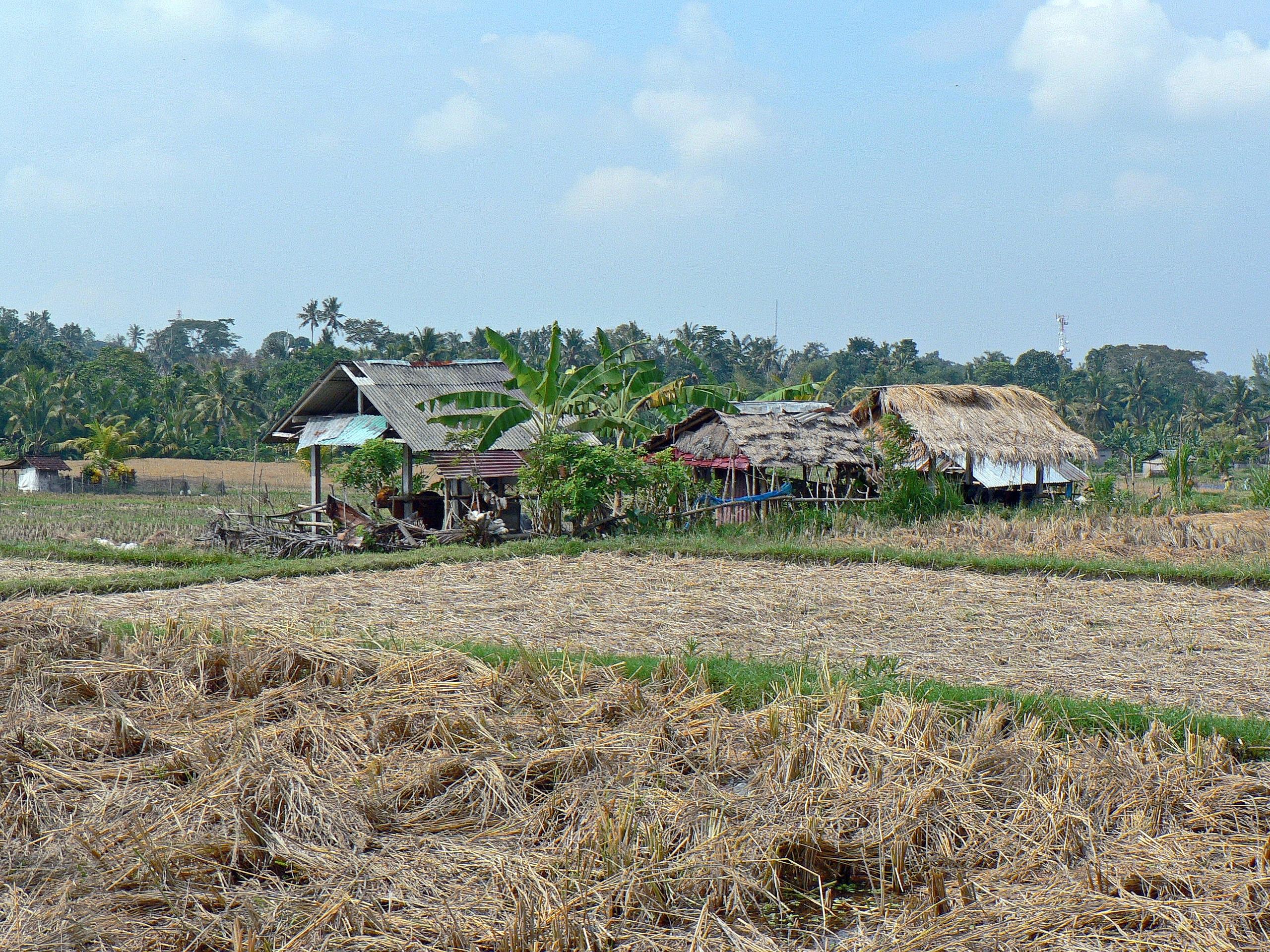 Gambar Pemandangan Bidang Tanah Pertanian Pondok Desa Tanaman