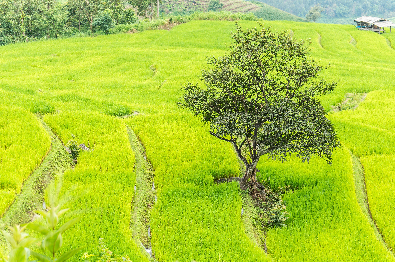 Gambar Pemandangan Bidang Tanah Pertanian Halaman Rumput