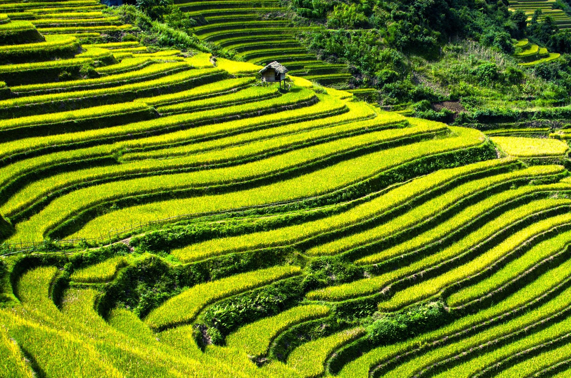 Gambar Pemandangan Bidang Hijau Tanah Pertanian Teras Padang