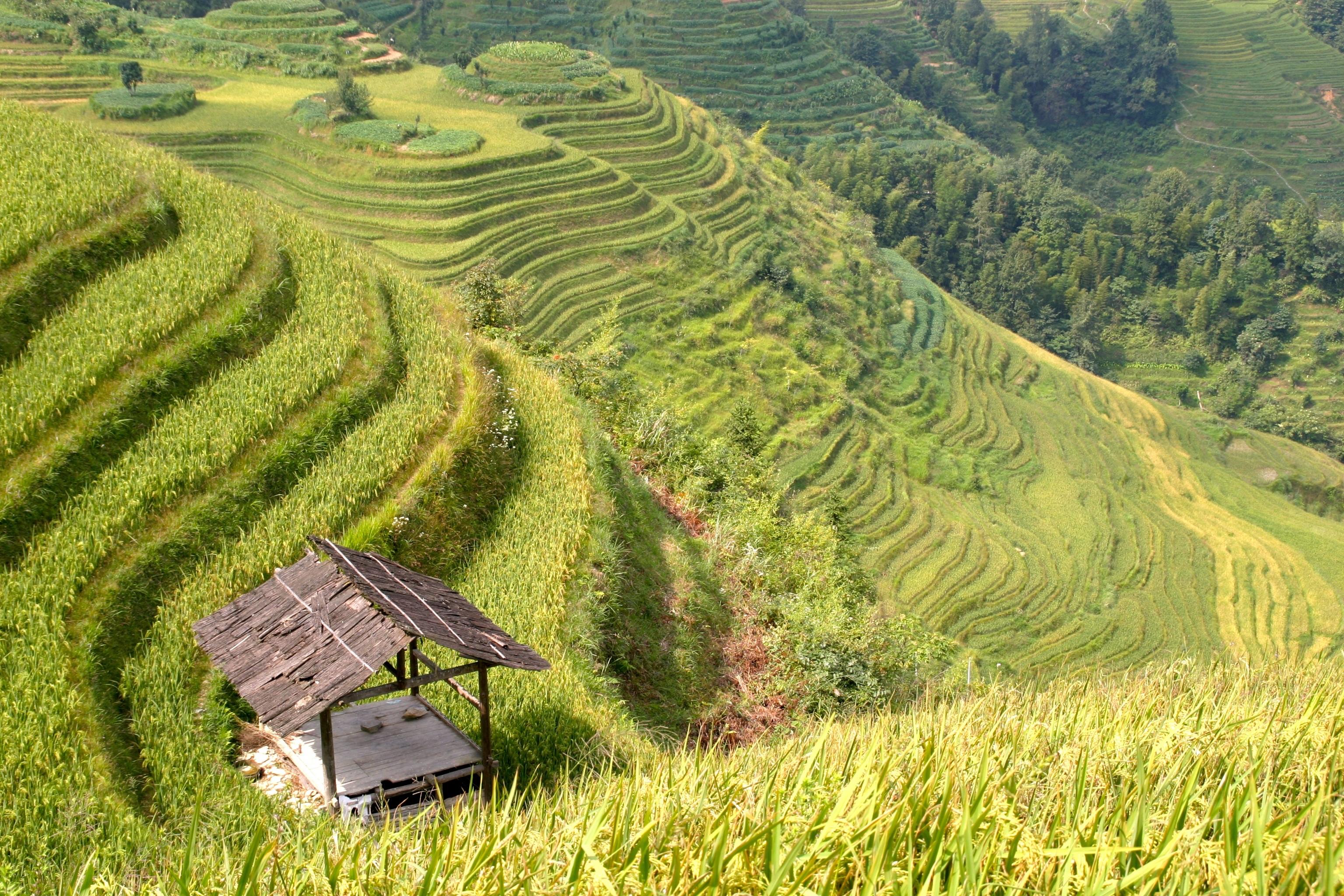Gambar Pemandangan Bidang Padang Rumput Tanaman Tanah Asia