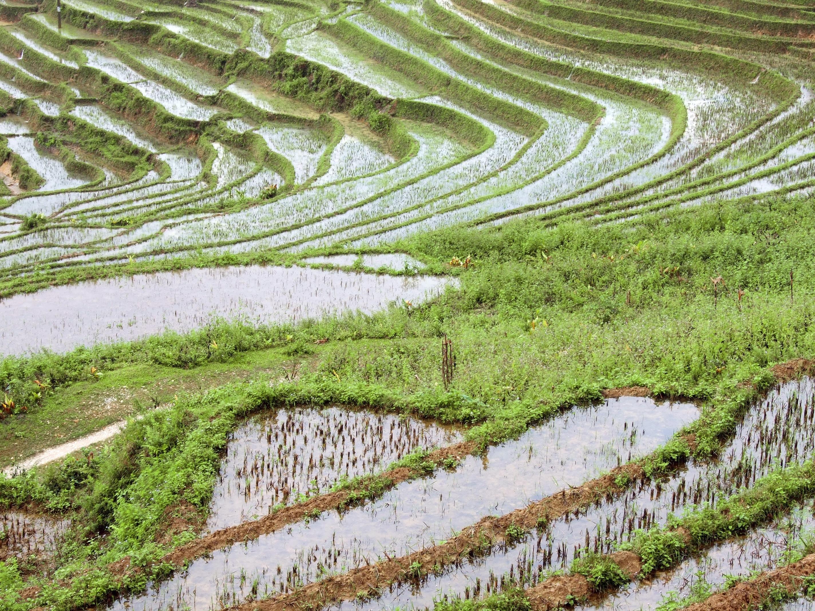 Fotos Gratis Paisaje Viajar Cultivo Suelo Asia
