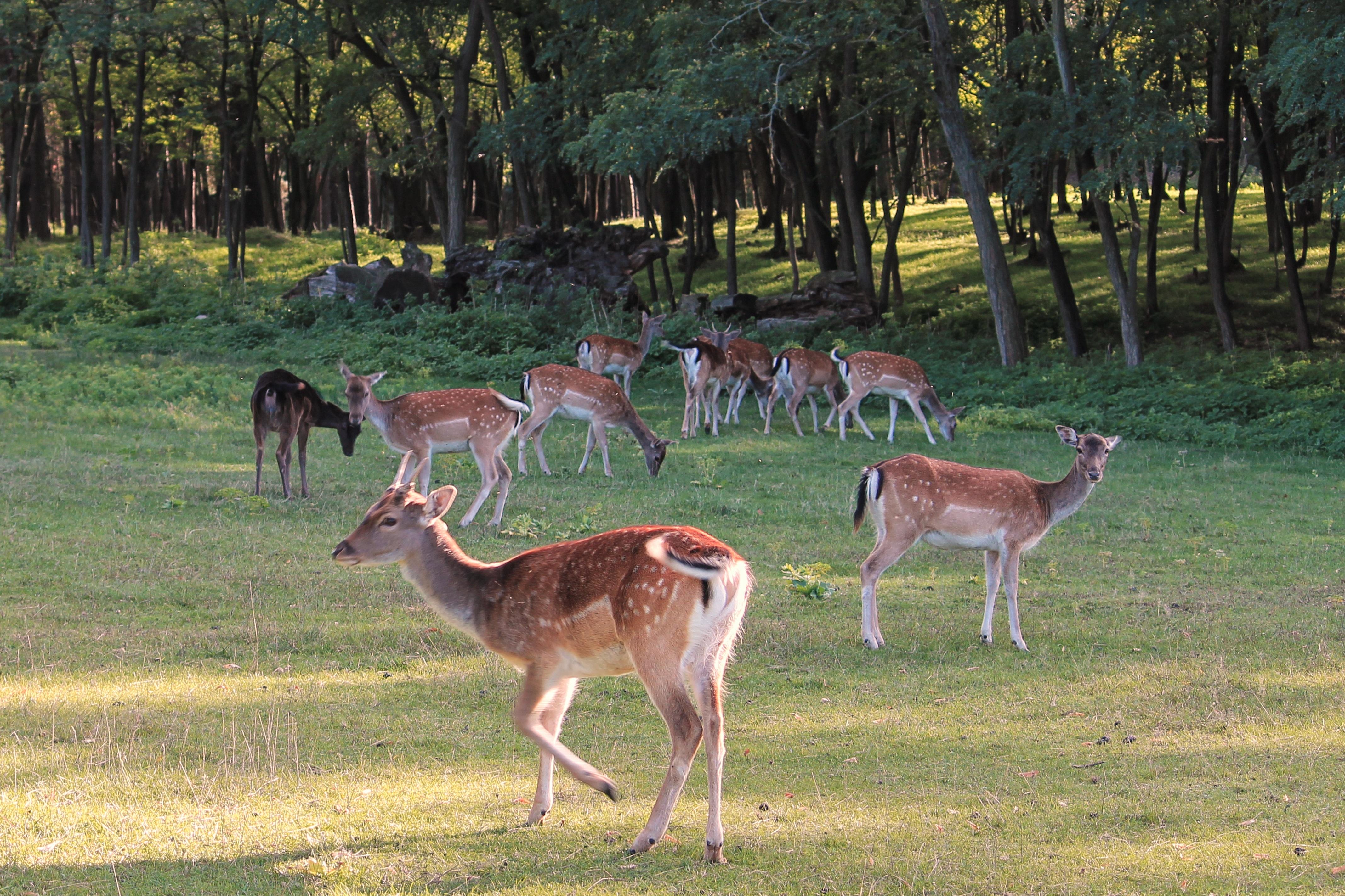 51 Gambar Pemandangan Hutan Dan Hewan Gratis Terbaik