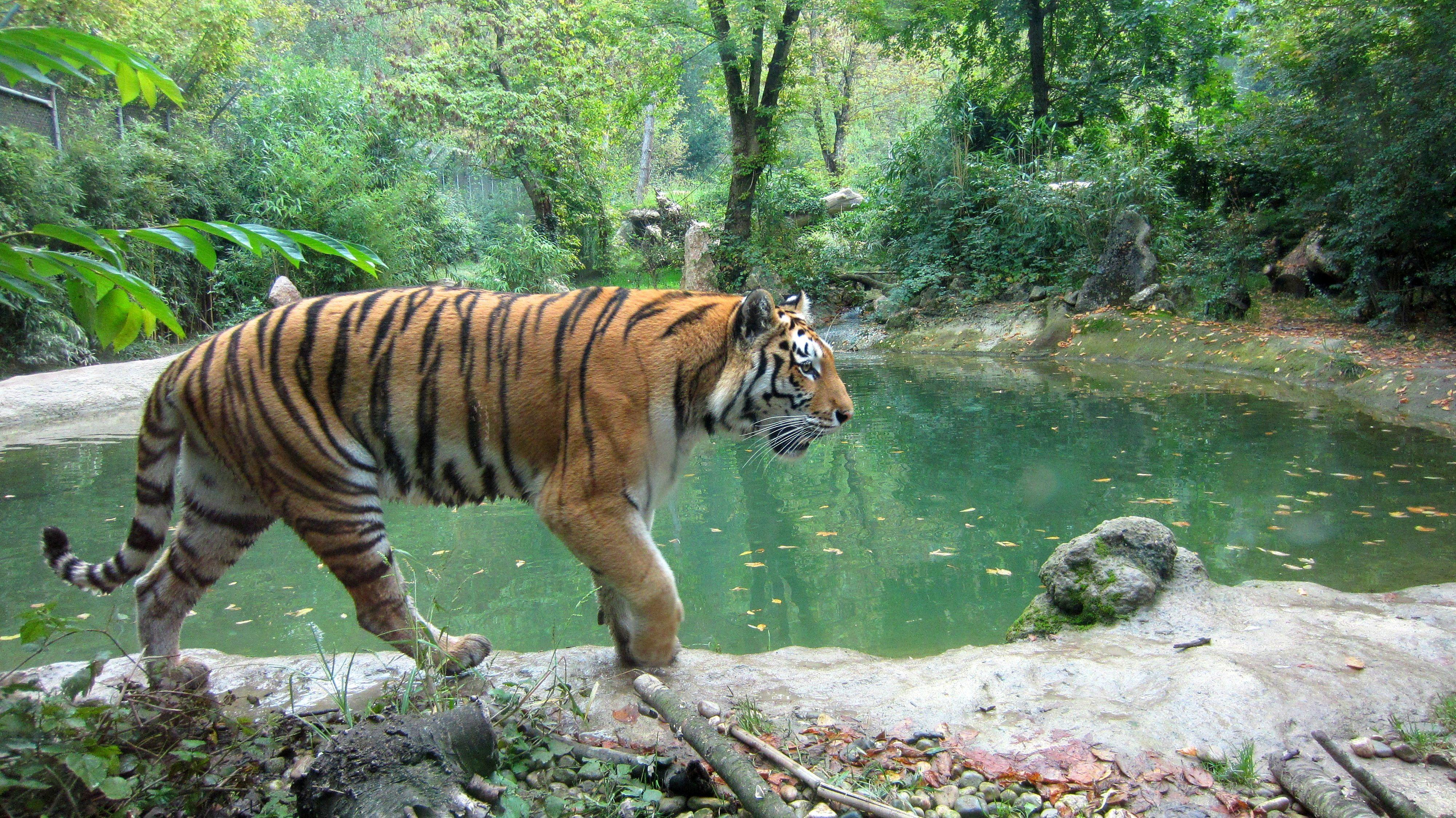 700 Koleksi Gambar Hewan Beserta Pemandangannya Gratis
