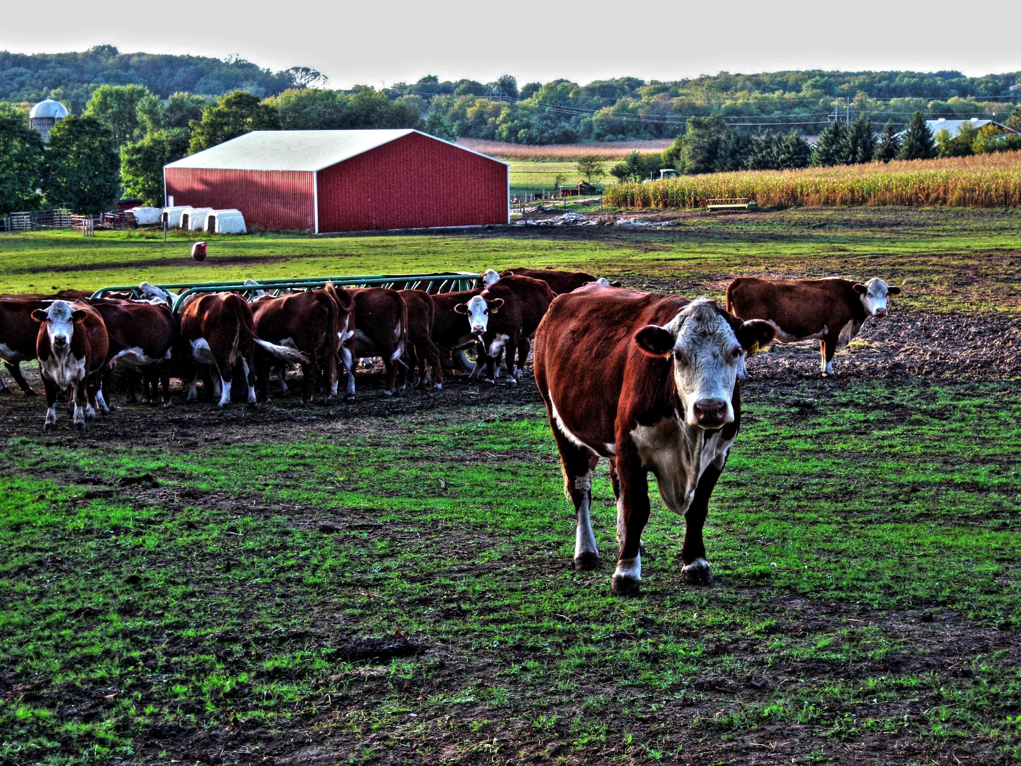реклама фермы картинки свое