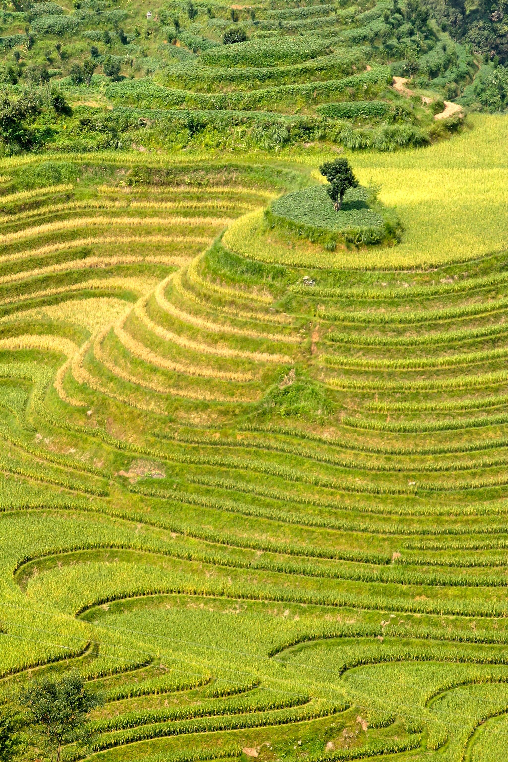 Gambar Pemandangan Bidang Padang Rumput Bukit Hijau Tanaman
