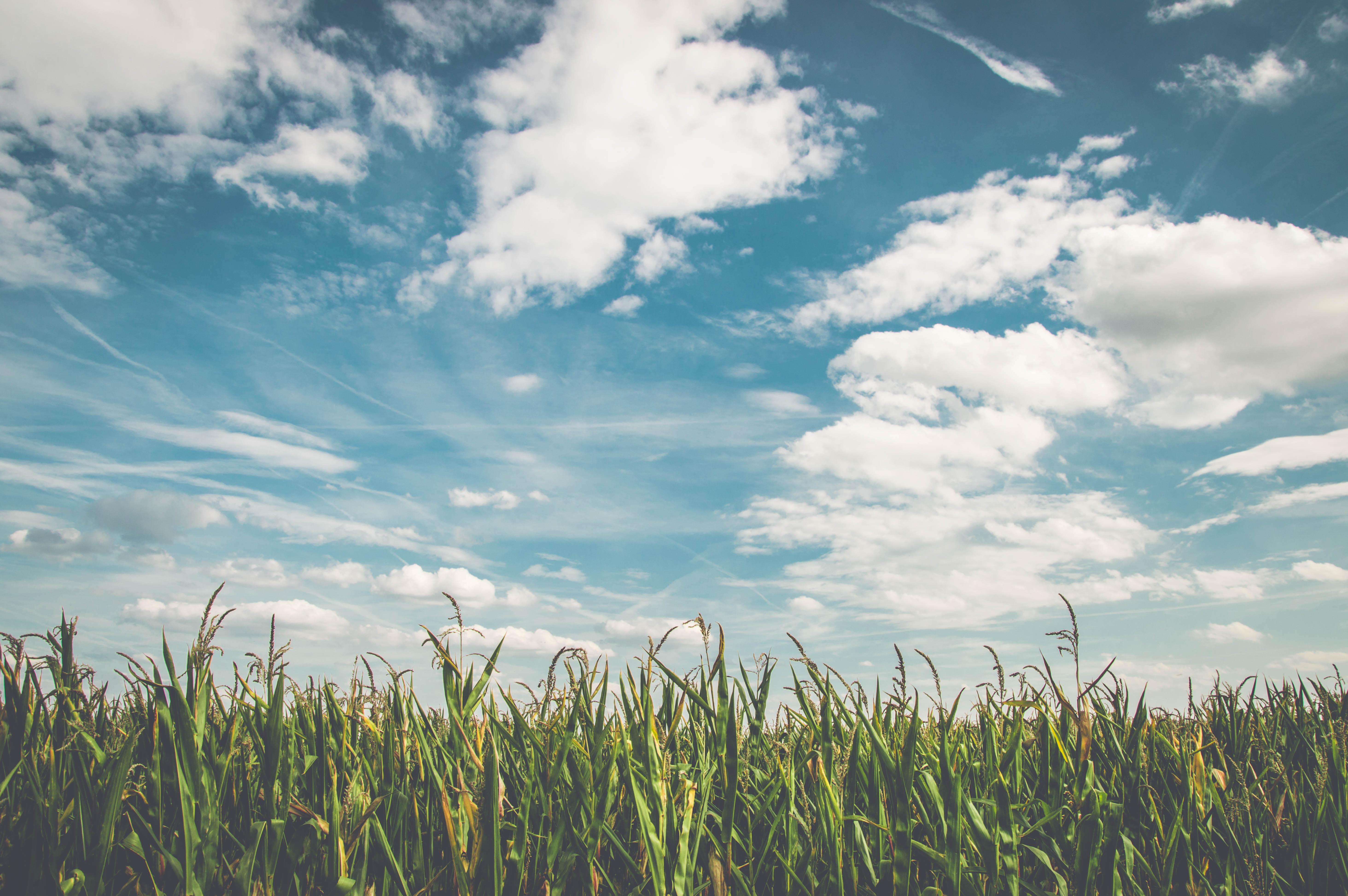 dry grass field background. Free Images : Landscape, Horizon, Cloud, Plant, Sky, Sun, Field, Meadow, Prairie, Sunlight, Air, Flower, Wind, Summer, Dry, Food, Green, Crop, Autumn, Dry Grass Field Background D