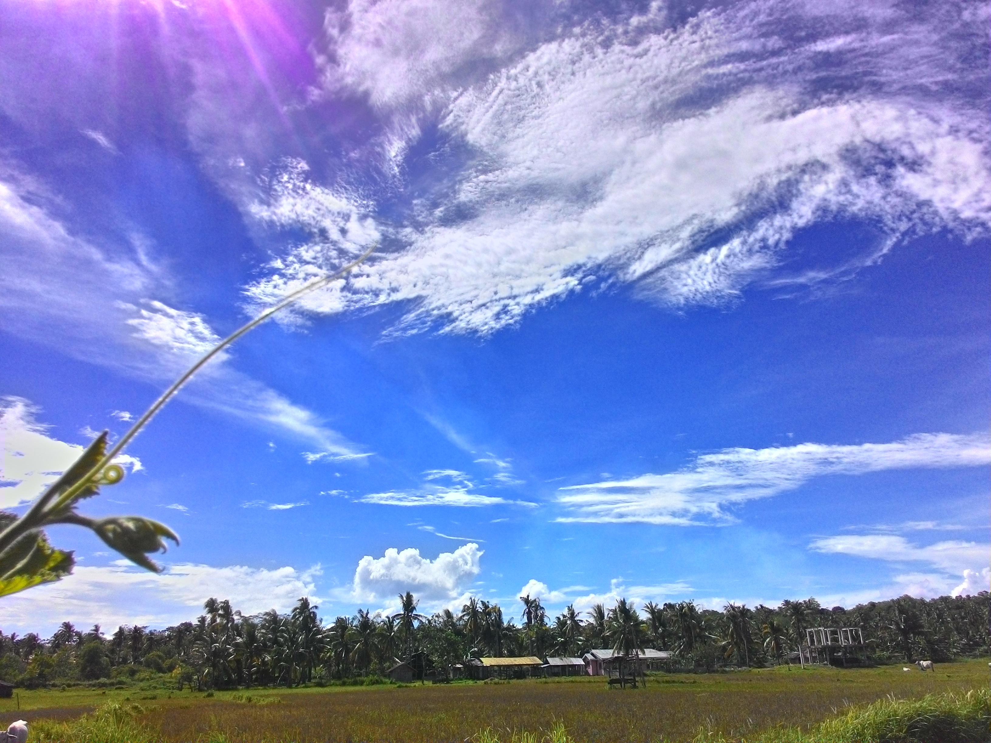 цветок лилейника картинки неба ветра солнца максимально подробный обзор