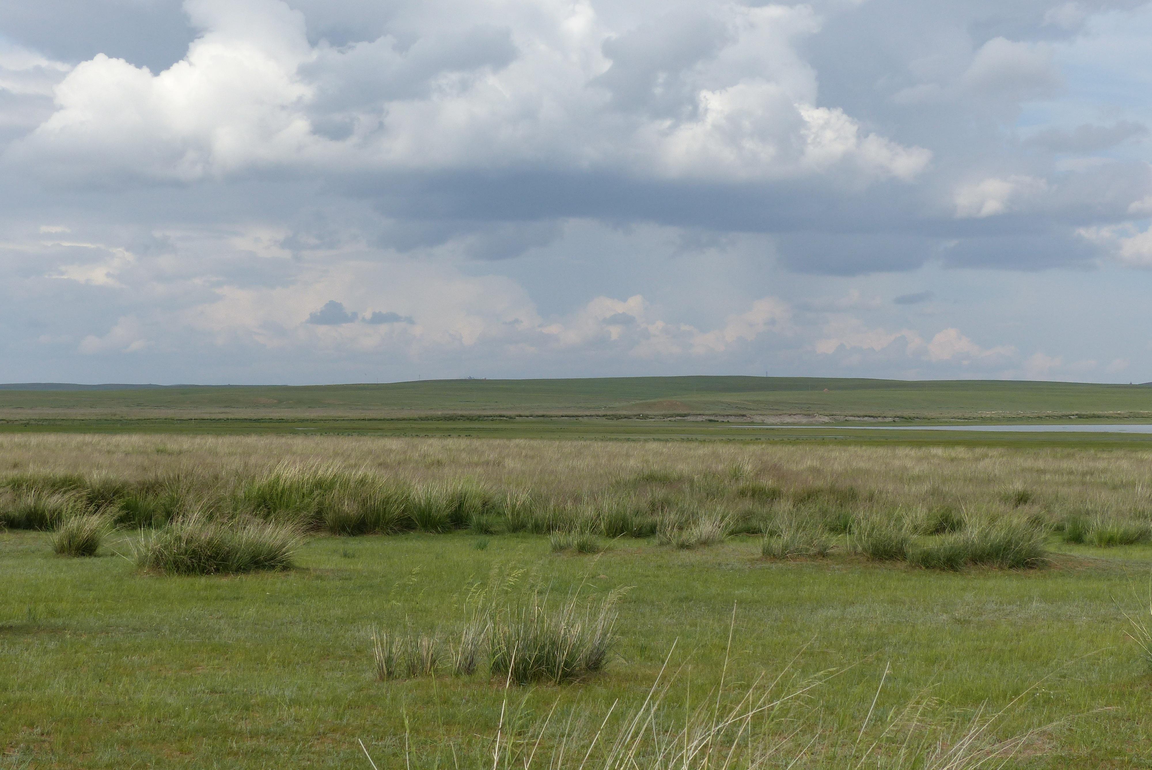 Images gratuites paysage herbe horizon le marais for Agence horizon paysage
