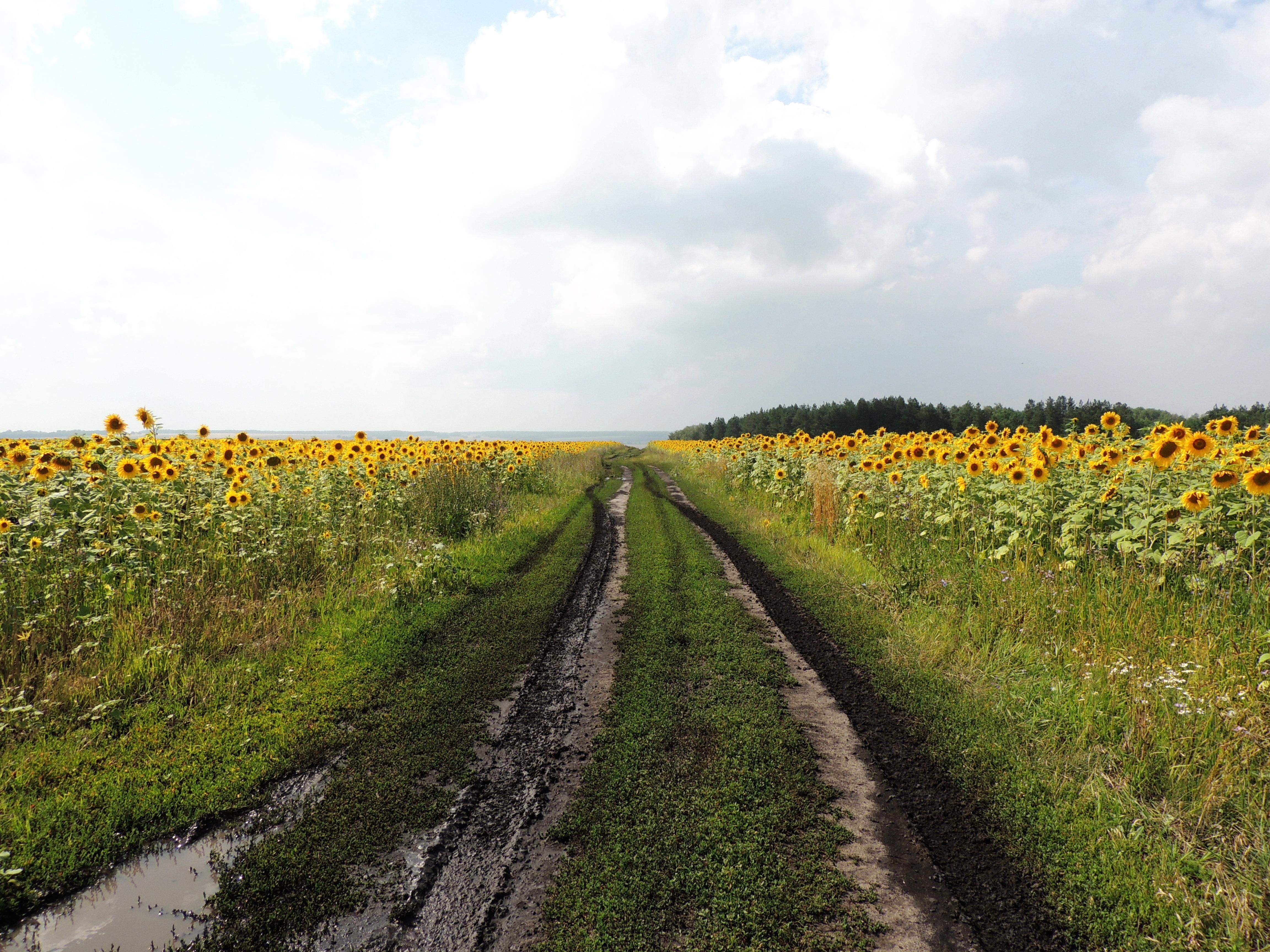 серьезная картинка рядом с полем благодаря натуральности