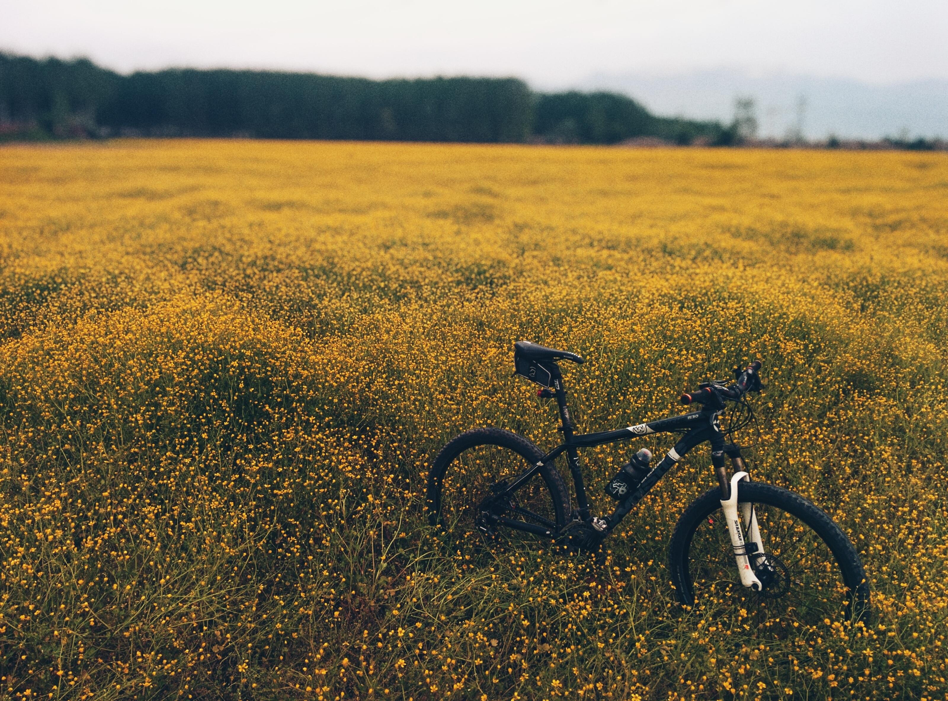 free images   landscape  outdoor  horizon  meadow  prairie  morning  flower  bicycle  bike