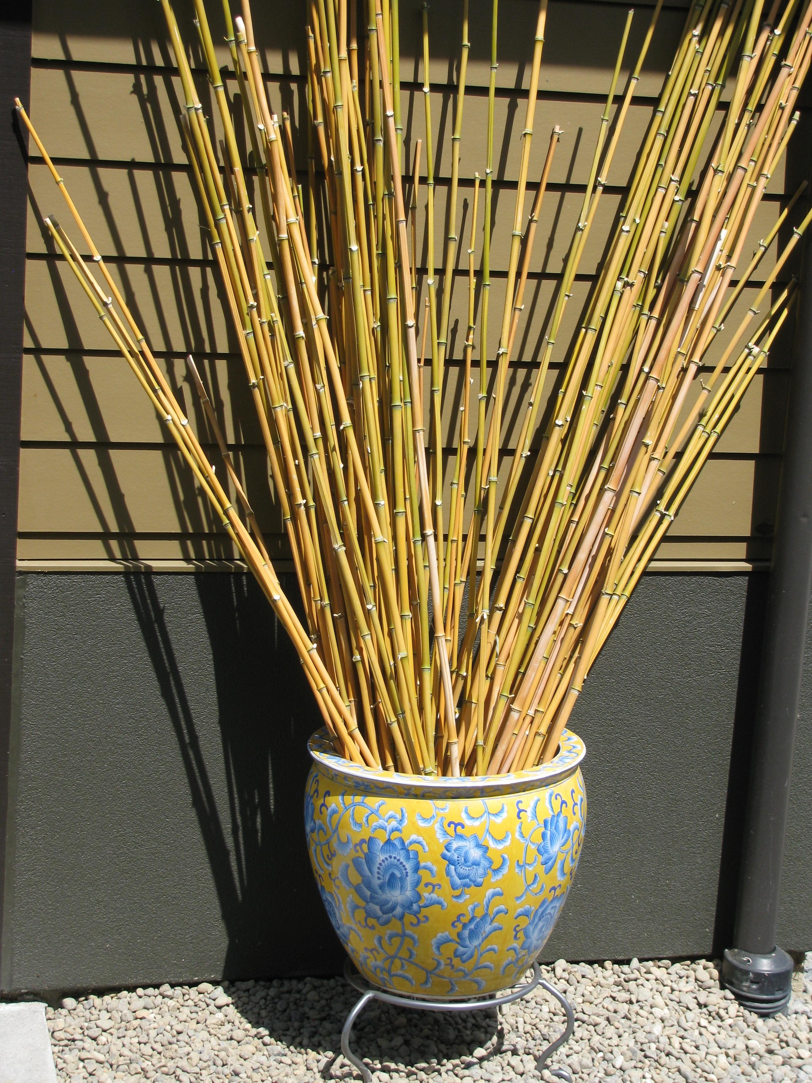 Gratis Billeder Landskab Graes Plante Trae Blomst Vase