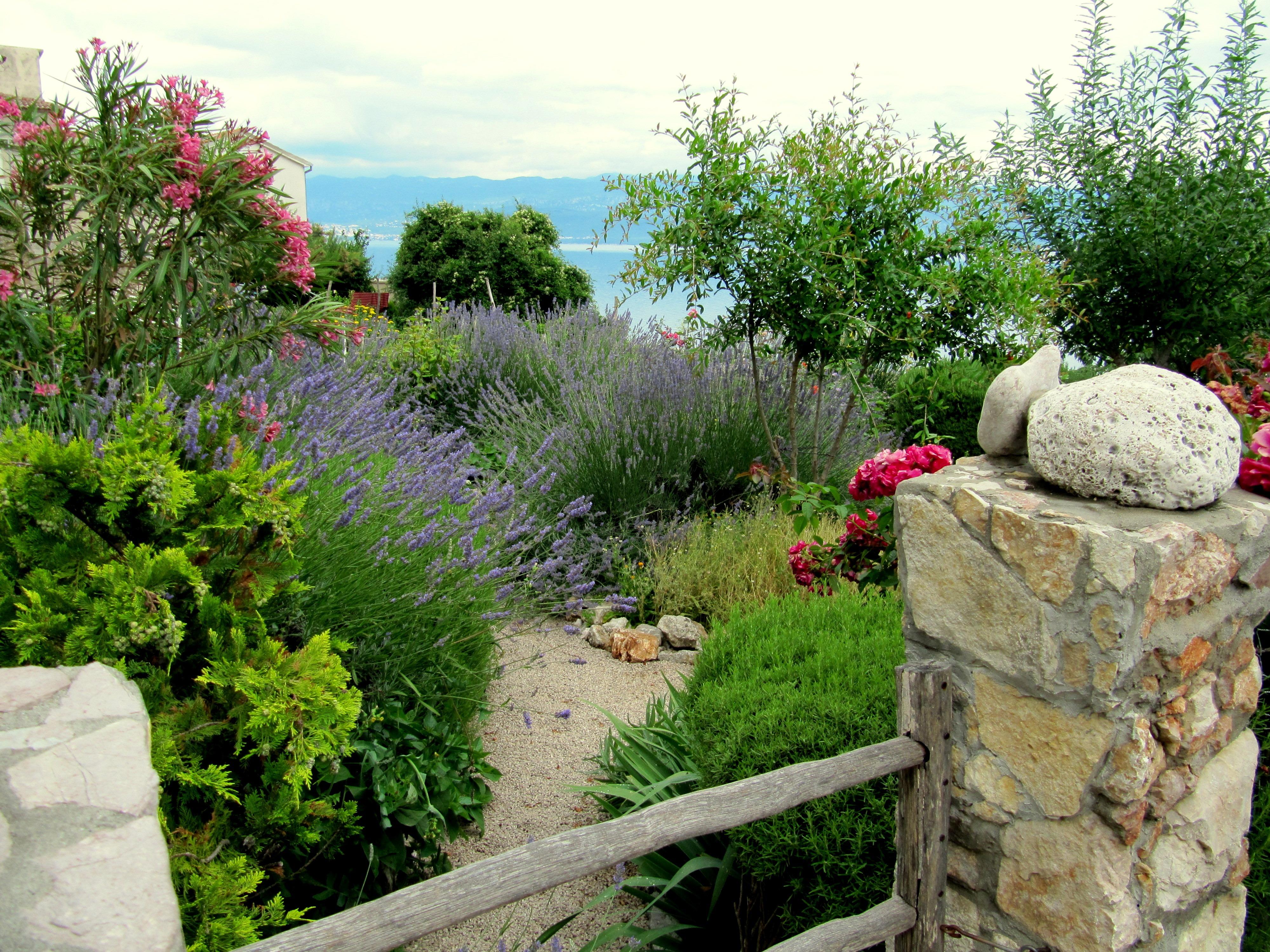 kostenlose foto landschaft gras rock bl hen pflanze rasen blume mauer stein gehweg. Black Bedroom Furniture Sets. Home Design Ideas