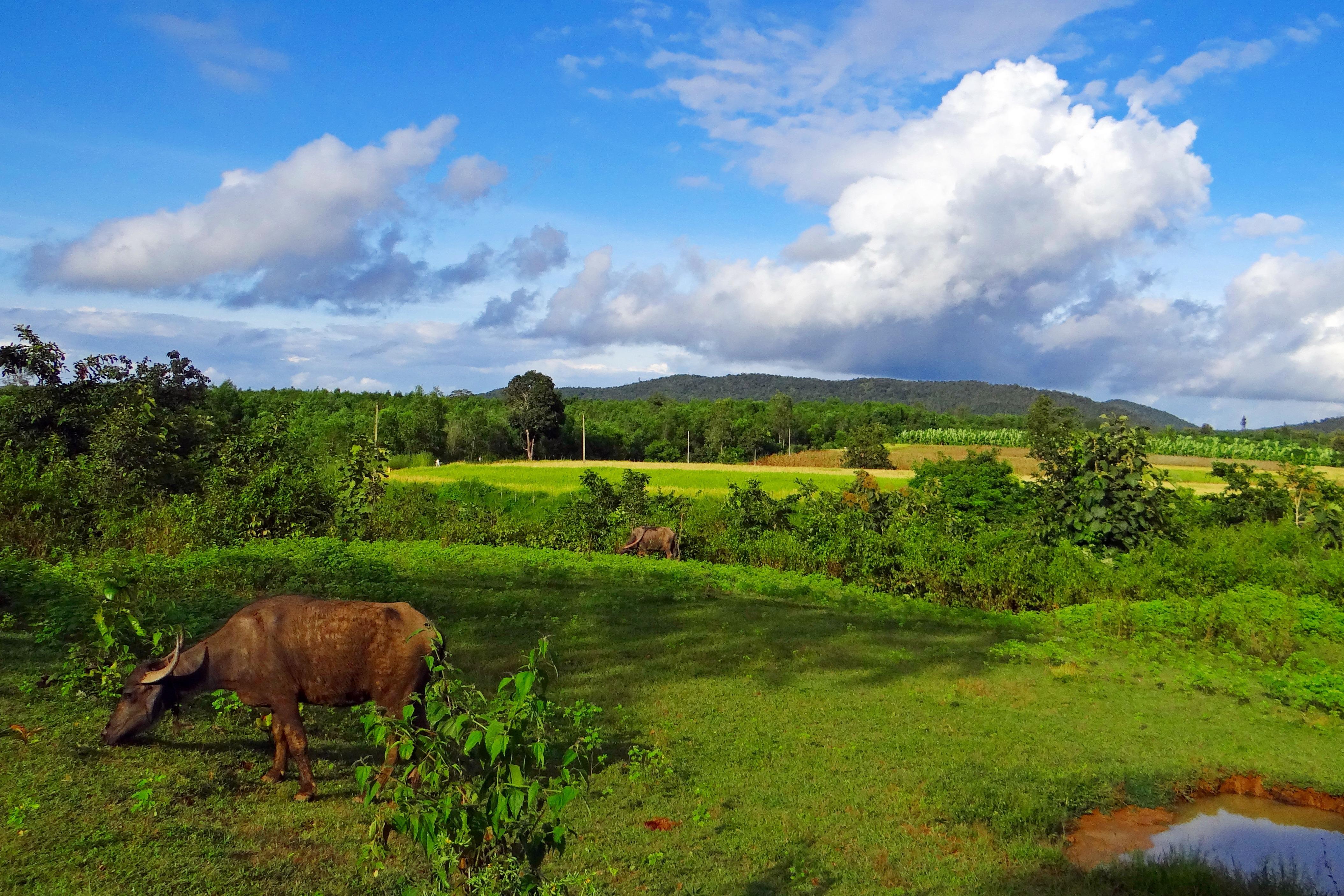 free images landscape grass wilderness field farm