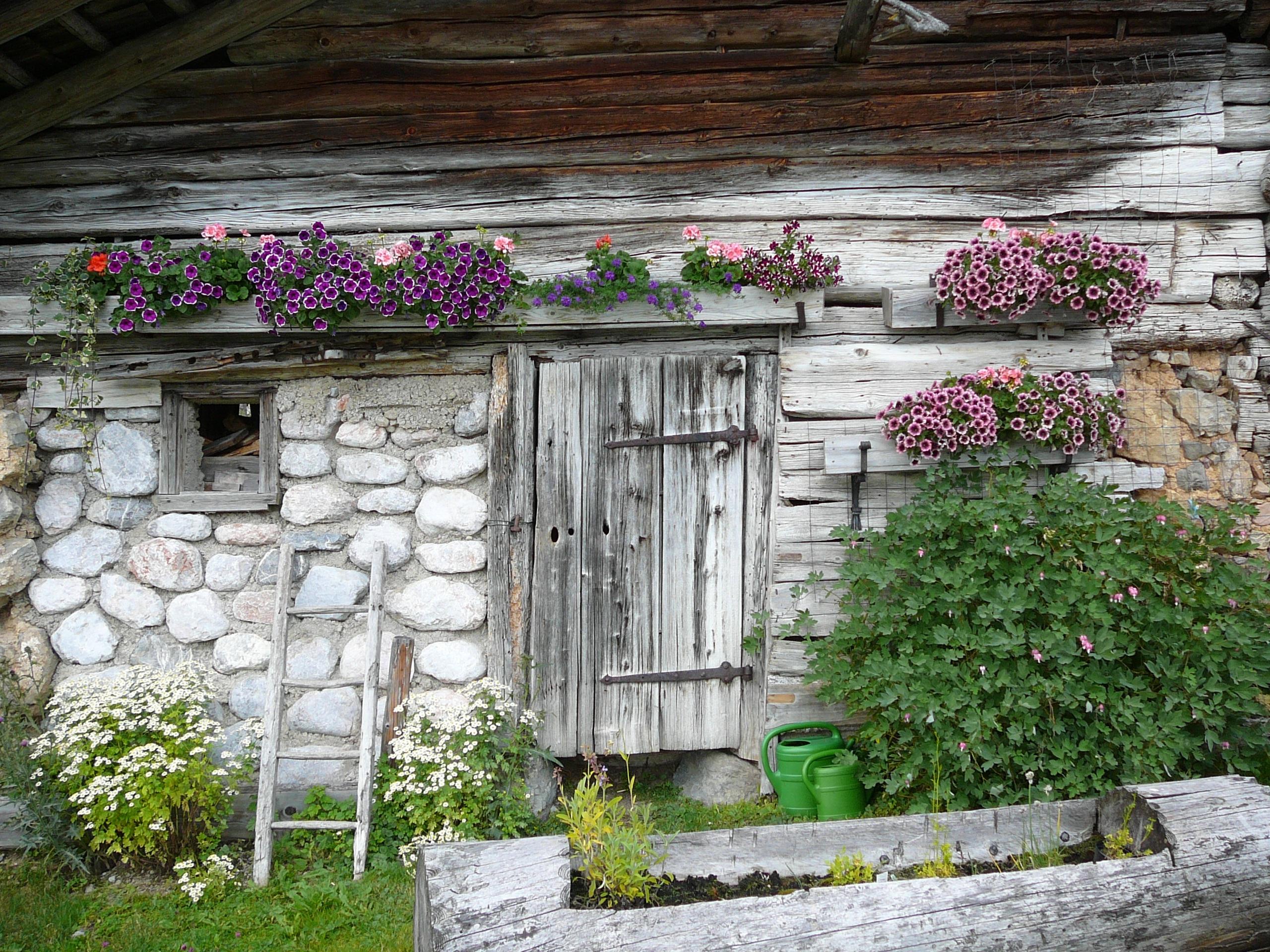 Images Gratuites Paysage Fleur Fen 234 Tre Vieux Grange
