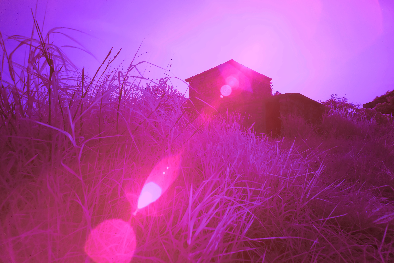 Gambar Pemandangan Cahaya Malam Sinar Matahari Ungu Daun
