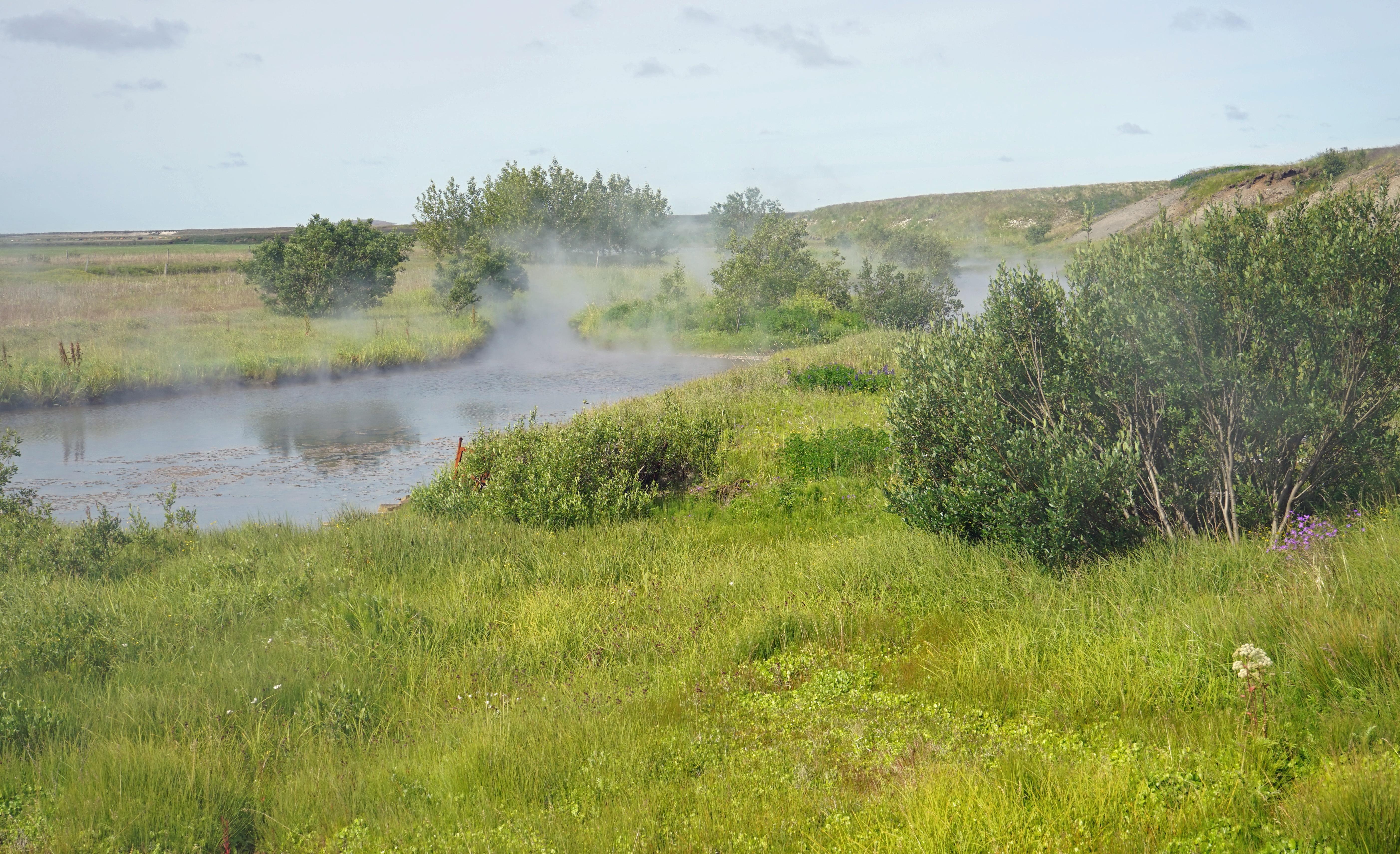 Islanti Kasvillisuus