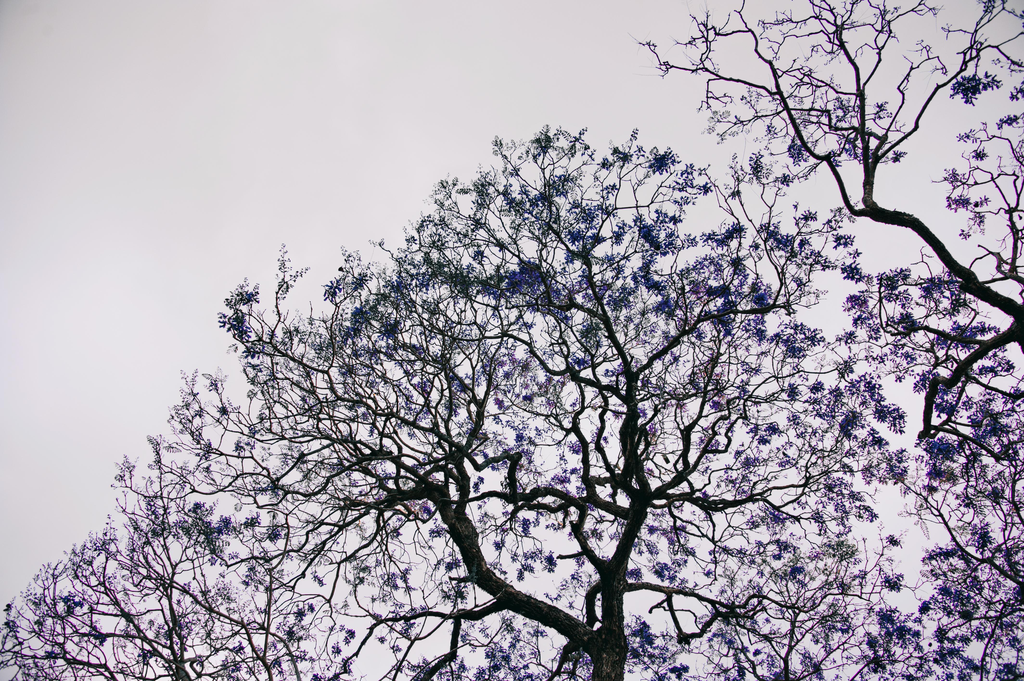 Gratis billeder : landskab, naturlig, træ, afdeling, himmel, blomst ...