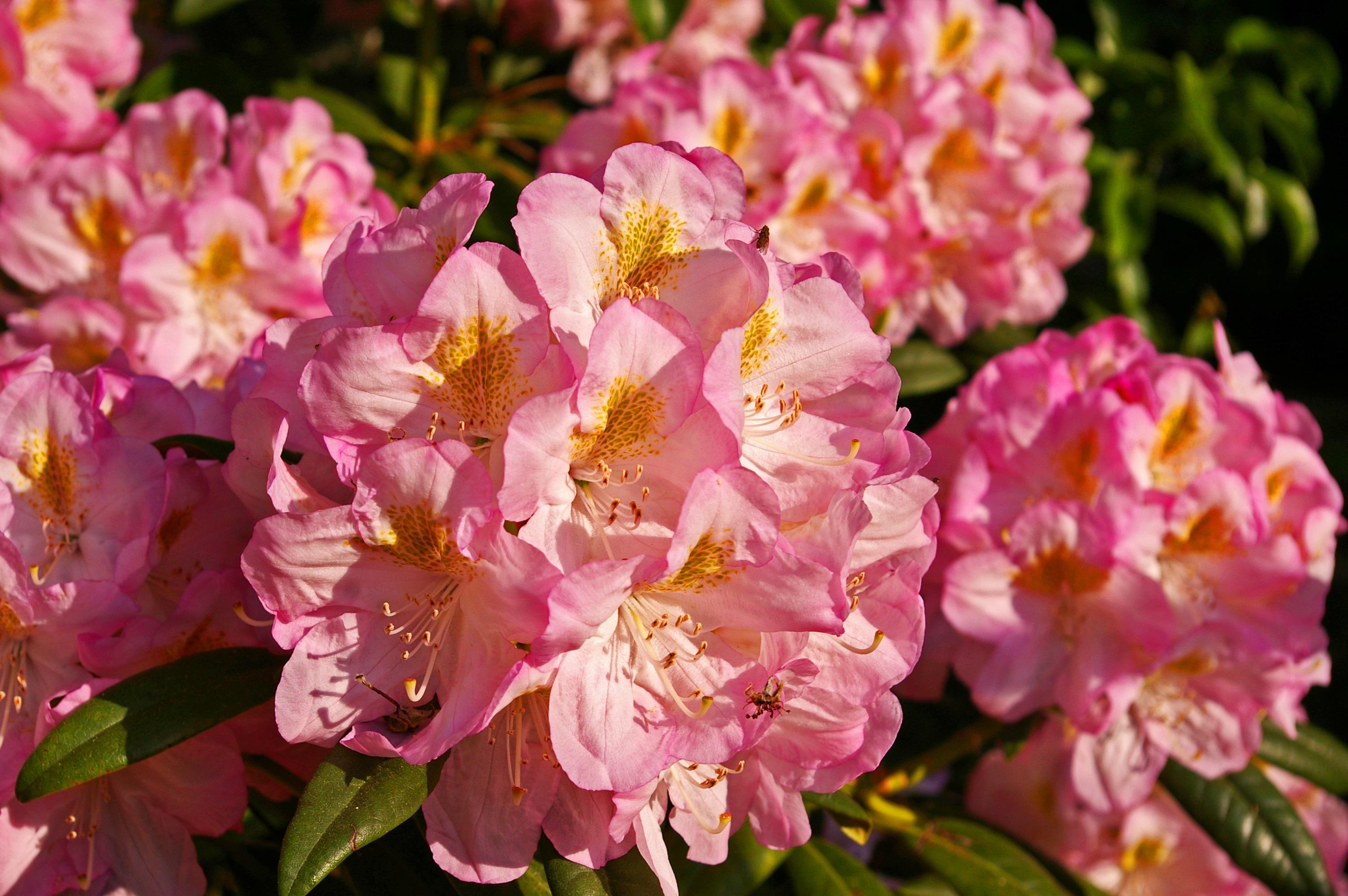 Images Gratuites Paysage La Nature Fleur Petale Floraison