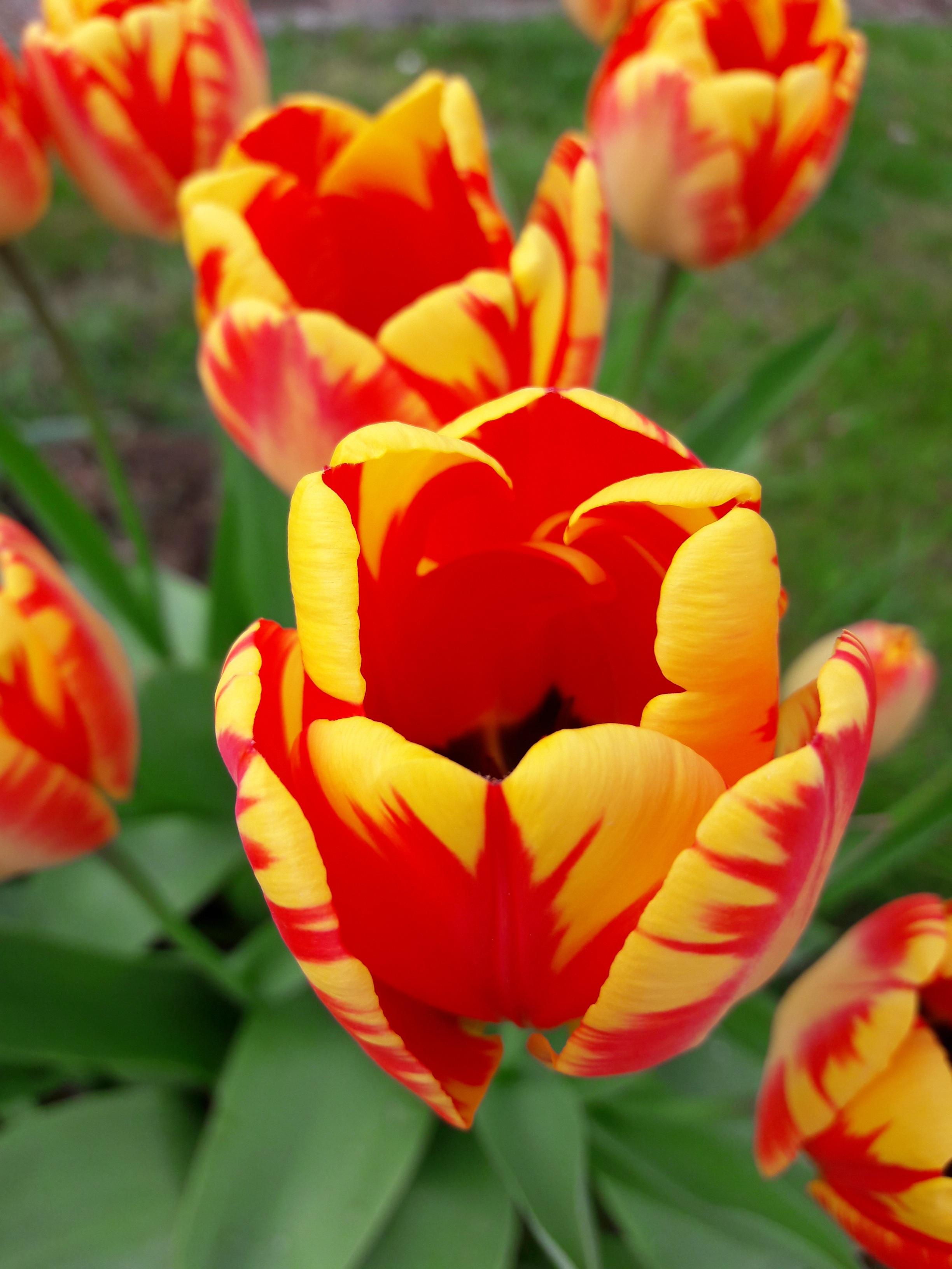 Download 960 Koleksi Wallpaper Bunga Dan Pemandangan Gambar HD Terbaik