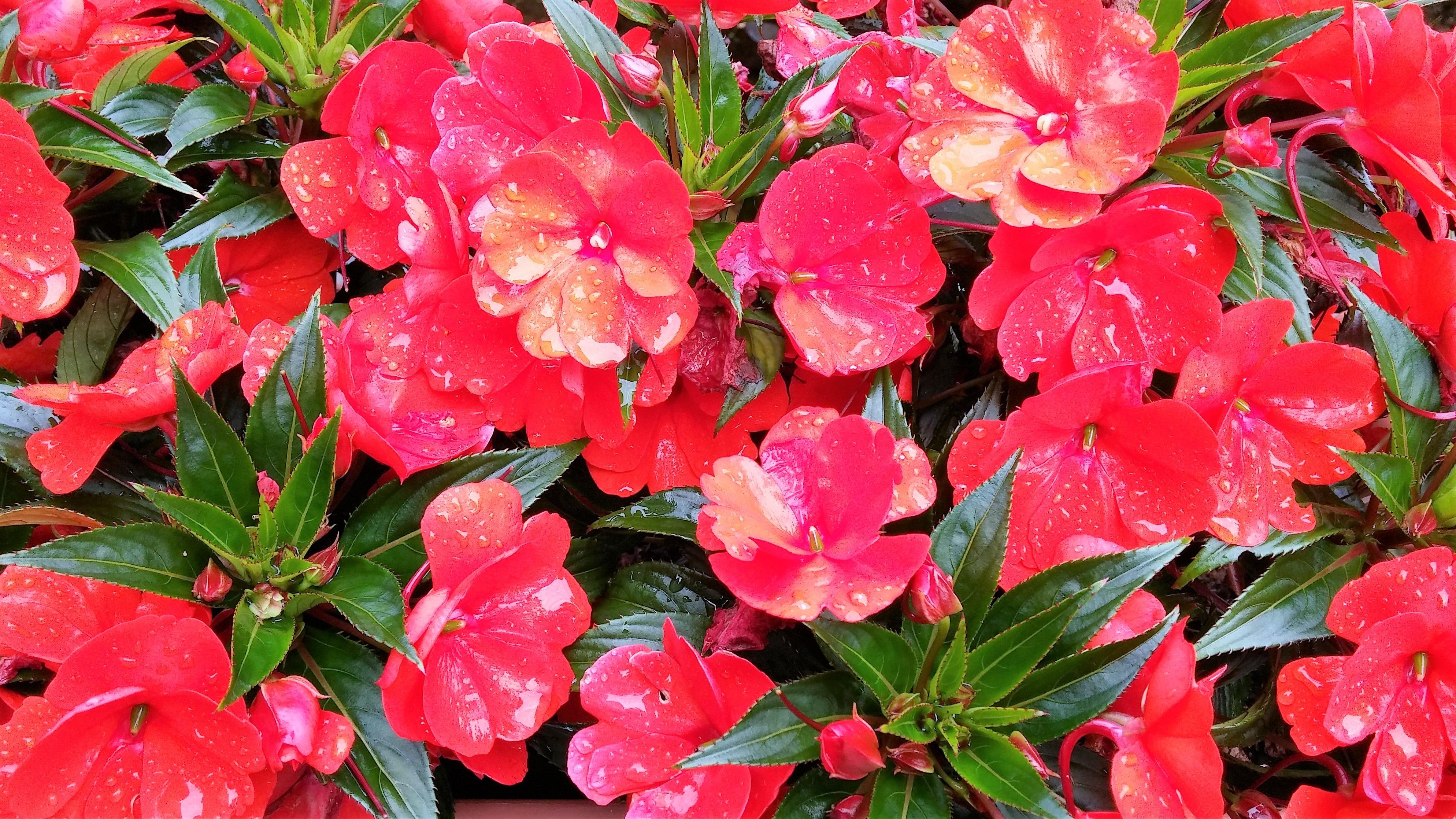 Free Images : landscape, nature, blossom, leaf, flower, petal, bloom ...