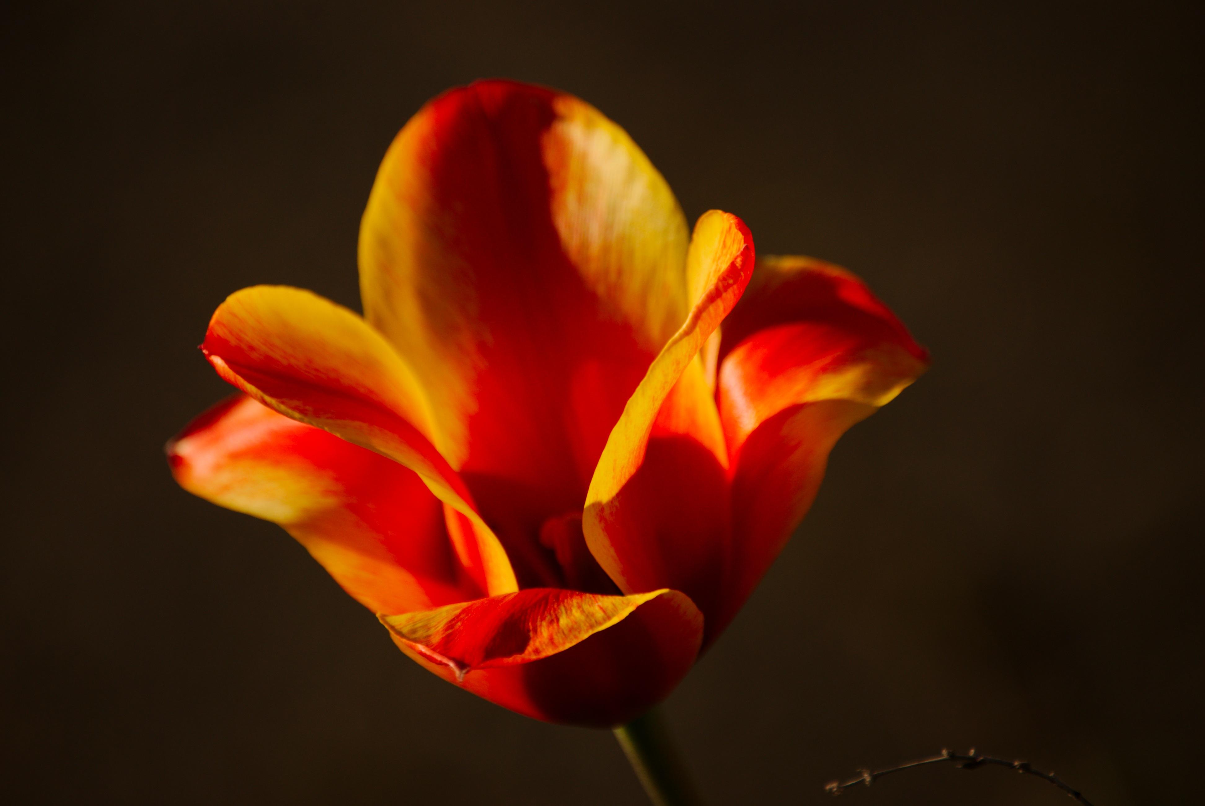 free images landscape nature blossom sun sunlight petal