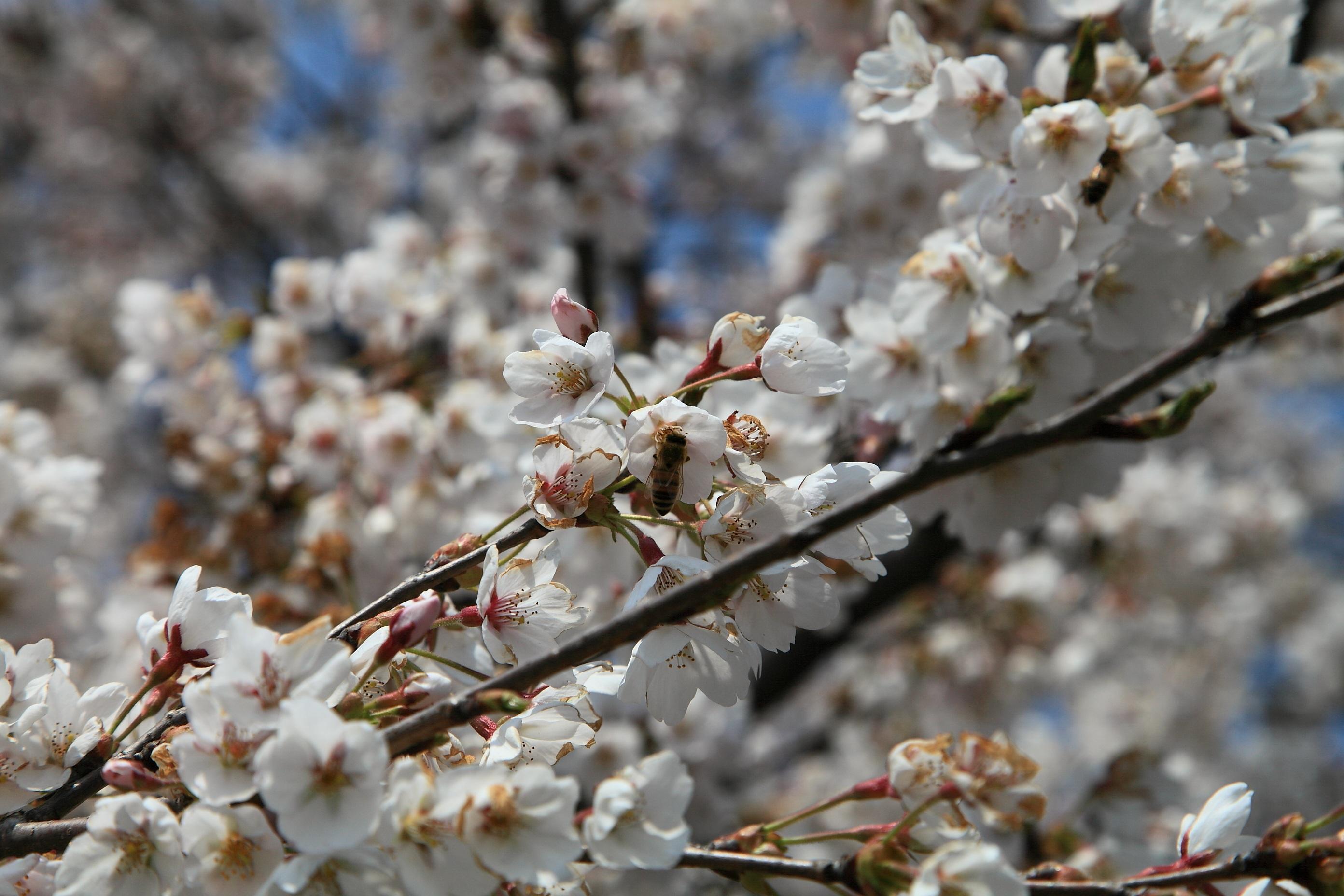 приезжают для фото весна в апреле когда все цветет этих очень