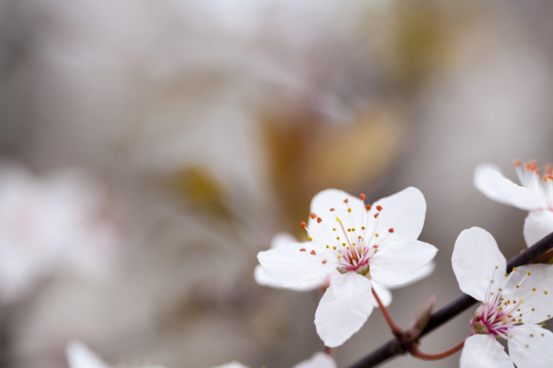 Free Images Landscape Nature Branch Plant Leaf Petal Spring