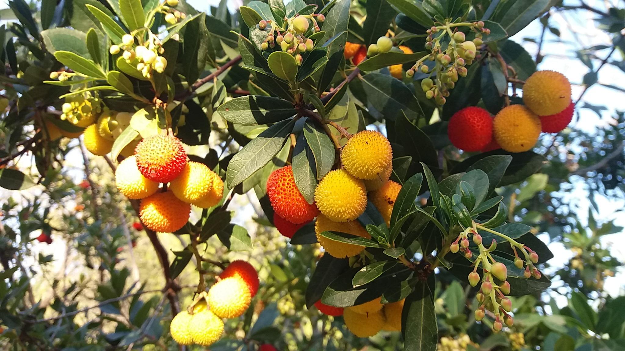 Fotos gratis paisaje naturaleza rama fruta flor comida produce hojas perennes oto o - Planting fruit trees in autumn ...