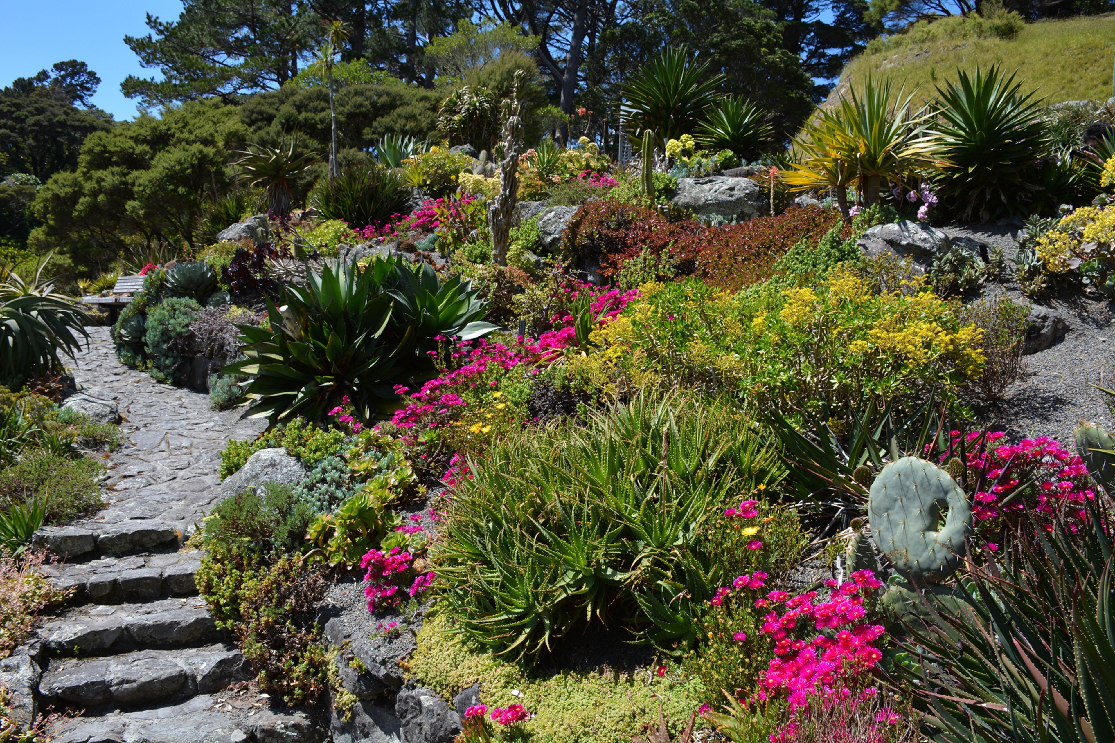 jardin avec muret en pierre