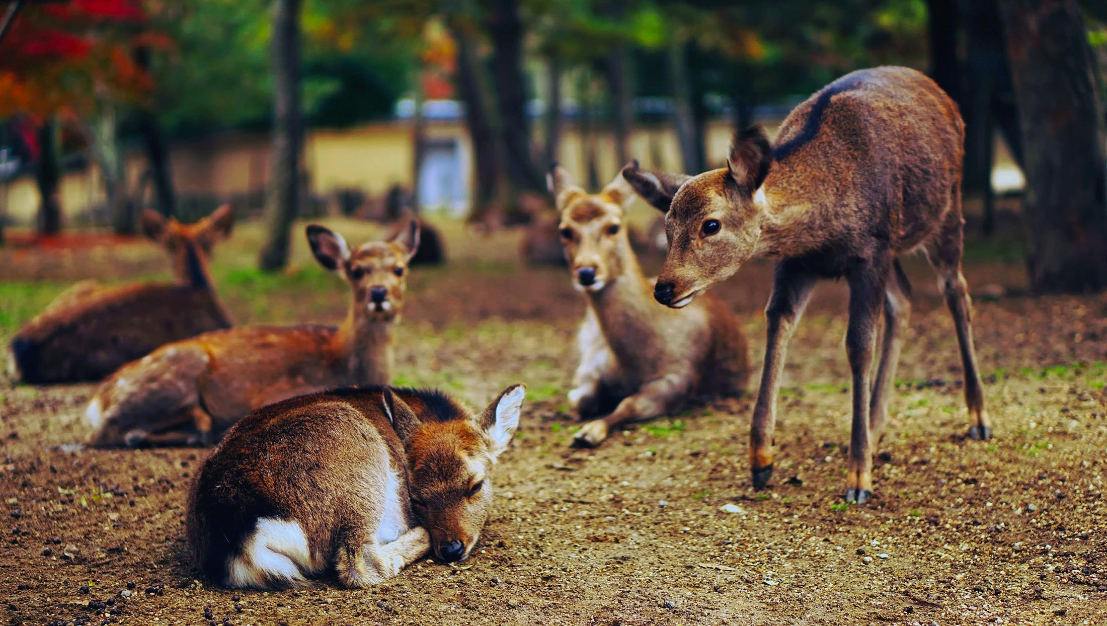 Gambar Pemandangan Alam Imut Margasatwa Kebun Binatang