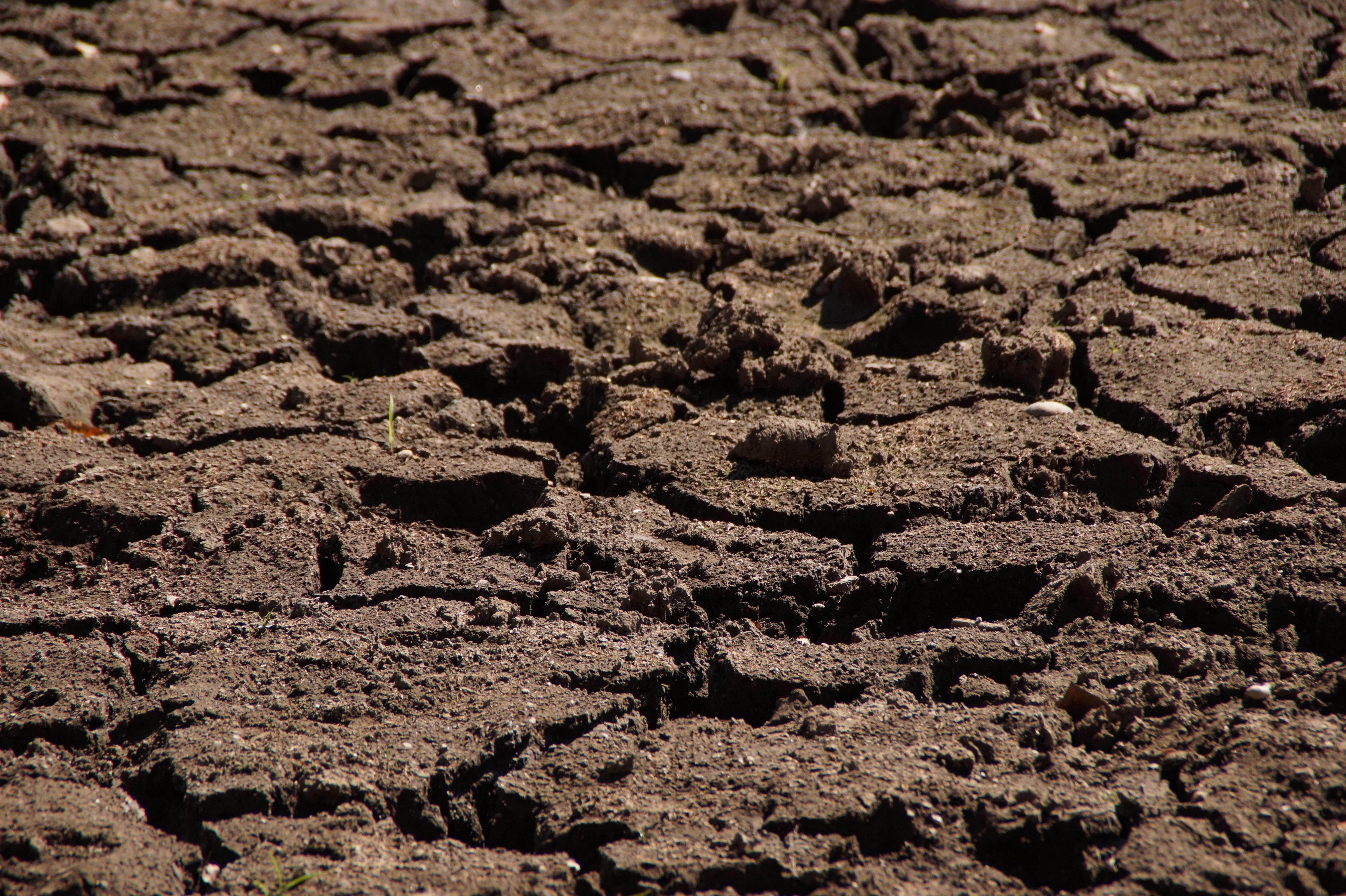 фото или картинки почв кавказе так