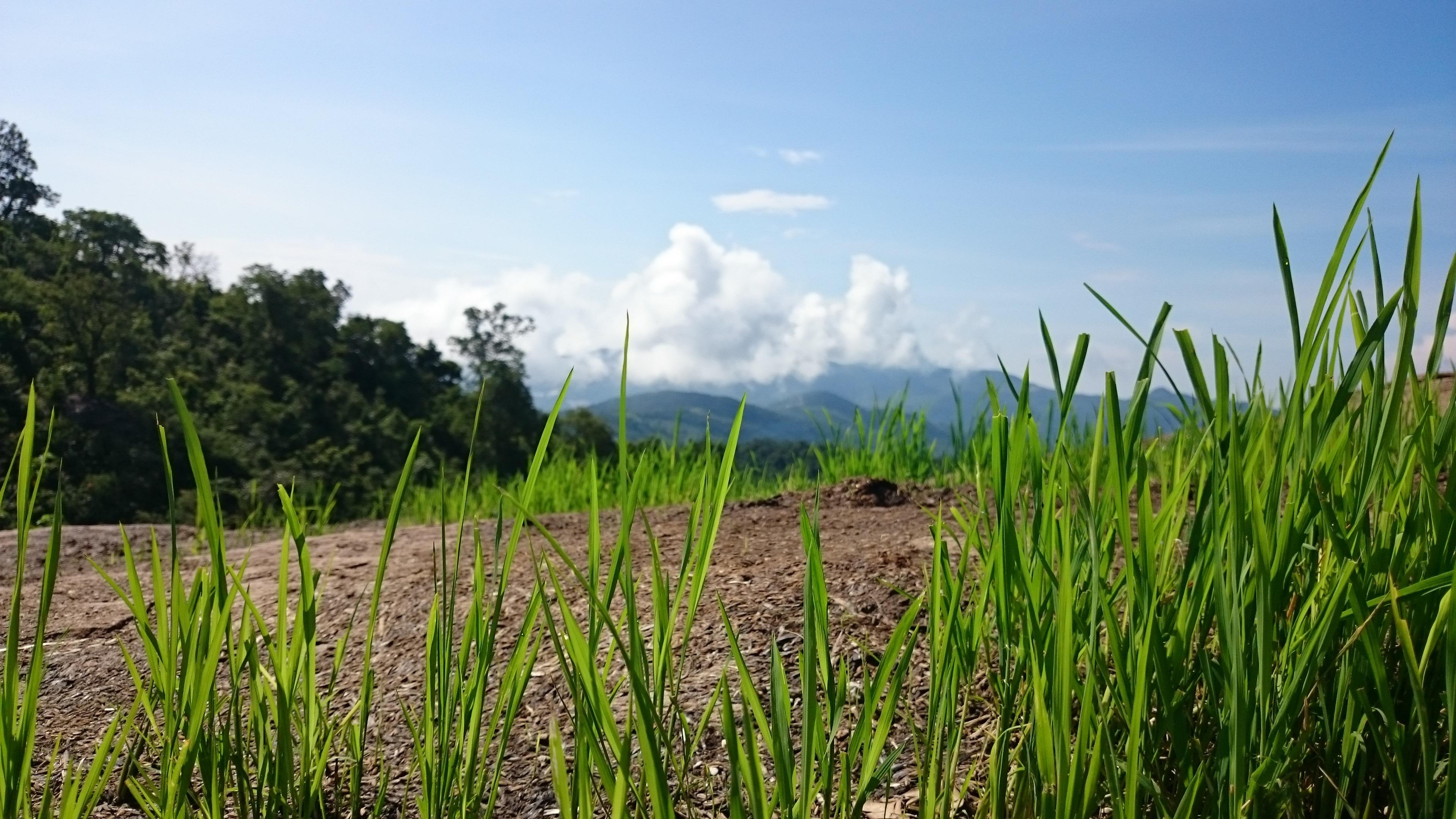 Images gratuites paysage la nature for t herbe for Plante herbe haute