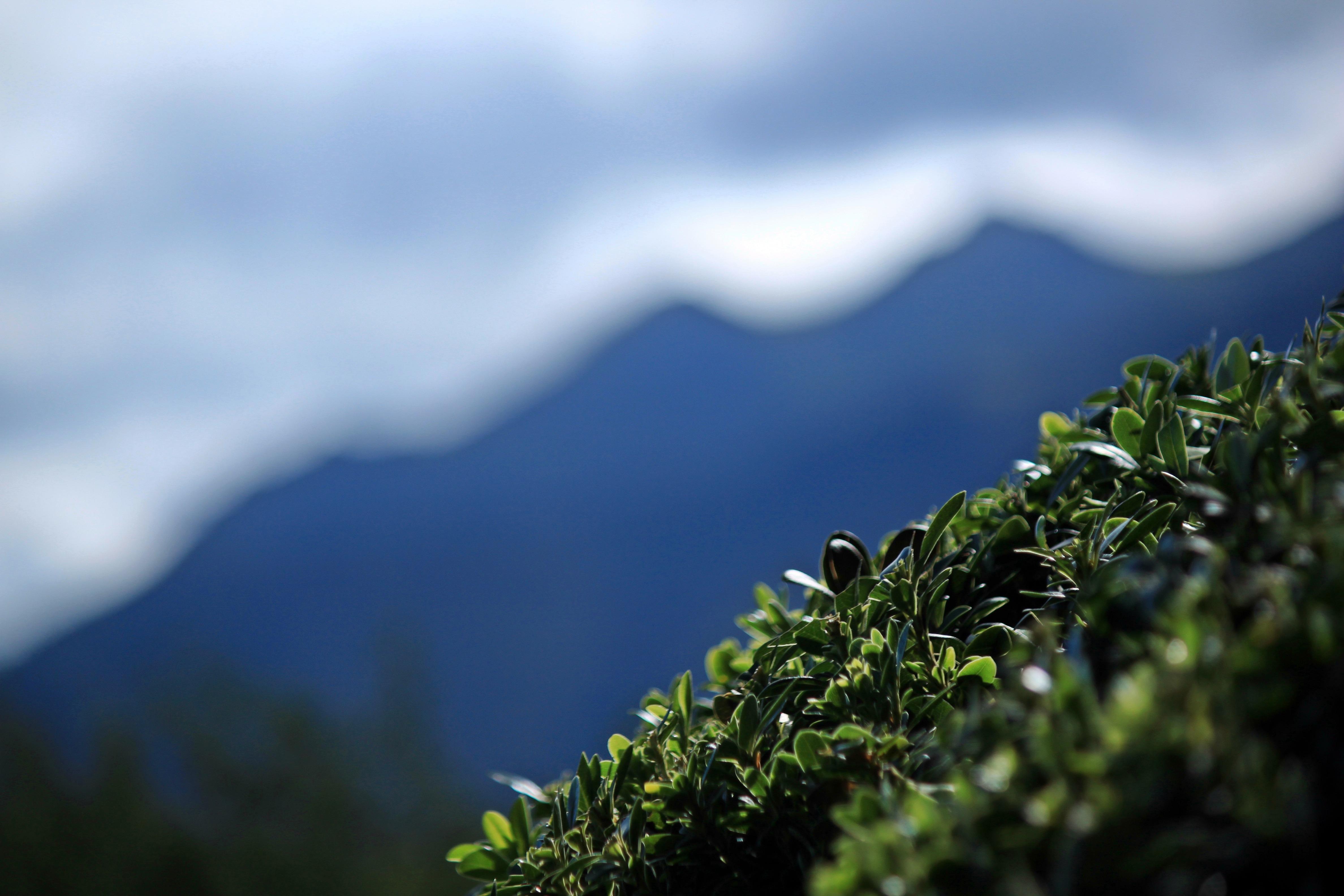 Gambar Pemandangan Hutan Gunung Cahaya Awan Menanam Langit