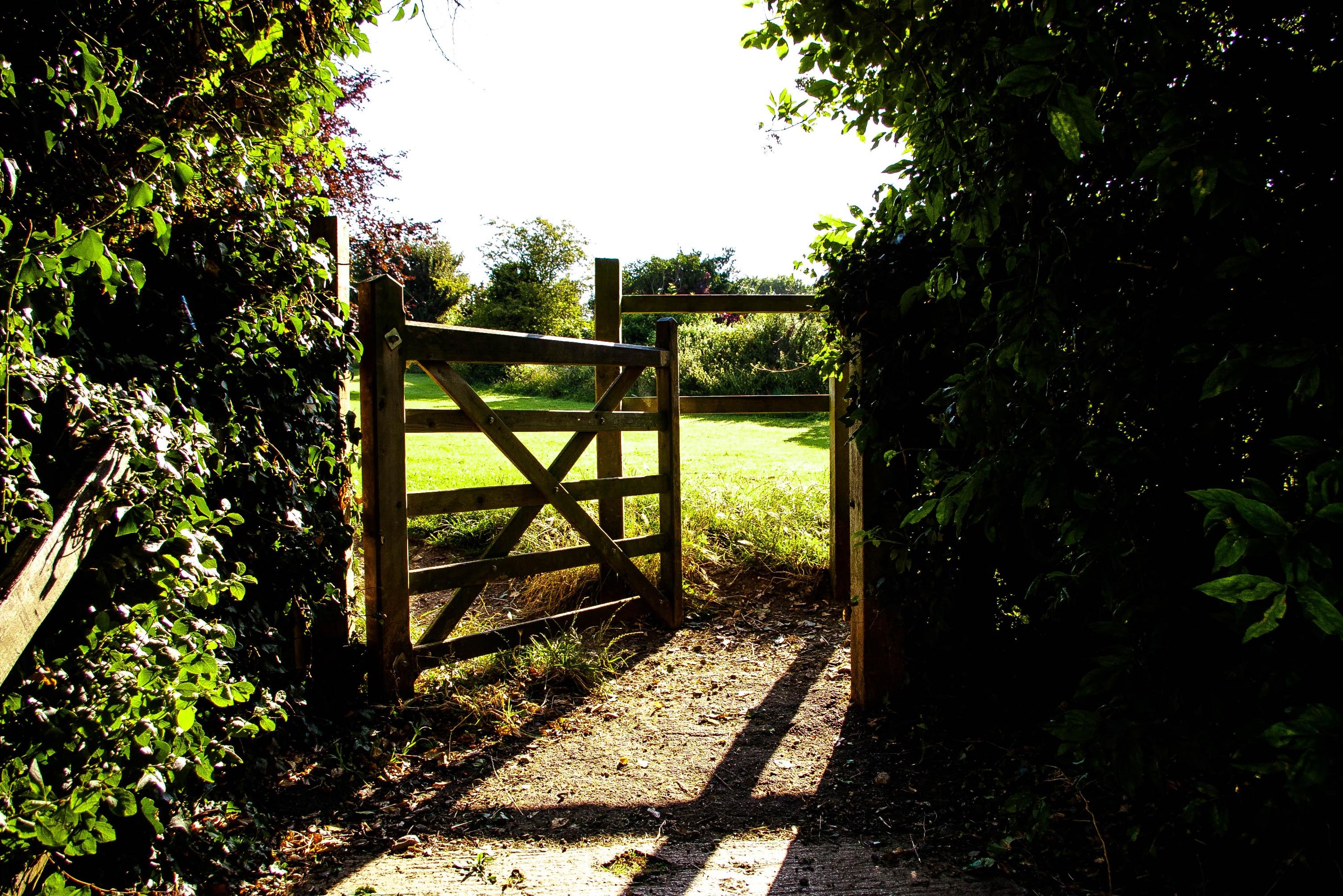 ... Landscape, Nature, Forest, Grass, Open, Fence, Trail, Field, Lawn,  Meadow, Sunlight, Green, Jungle, Scenic, Entrance, Cottage, Backyard, Garden,  Gate, ...