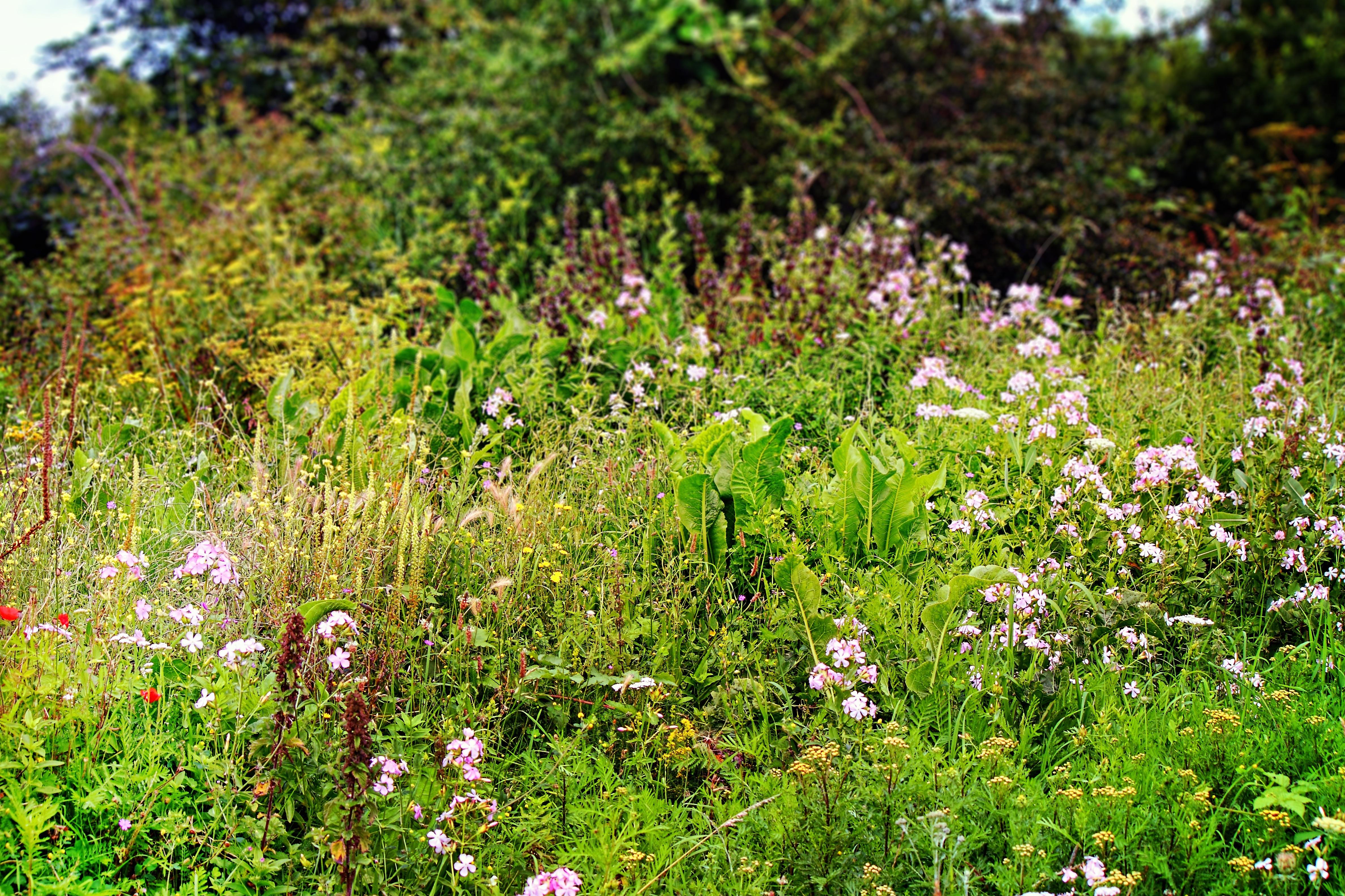Images gratuites paysage la nature for t herbe de for Plante herbe haute