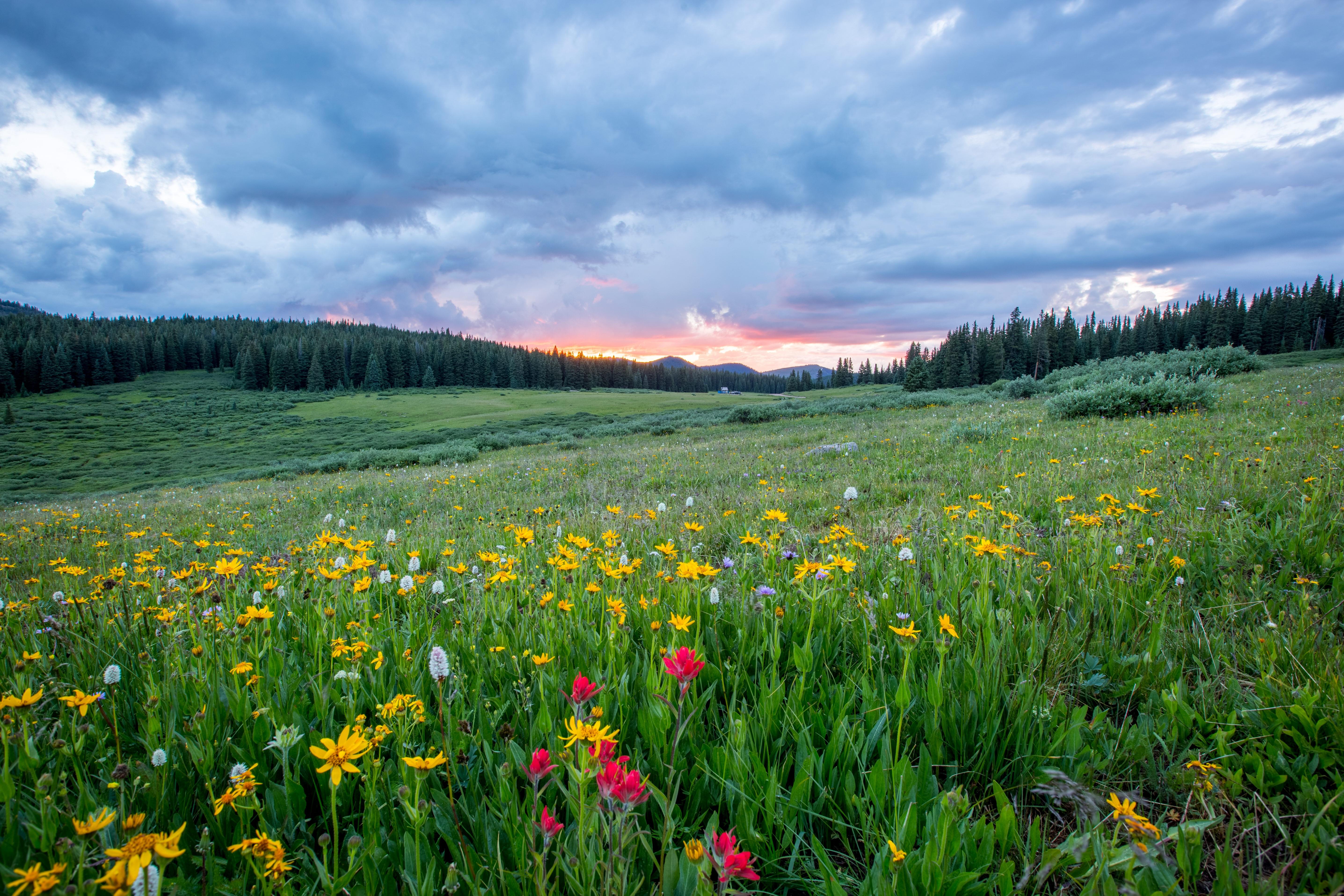 Free Images : Landscape, Nature, Forest, Wilderness