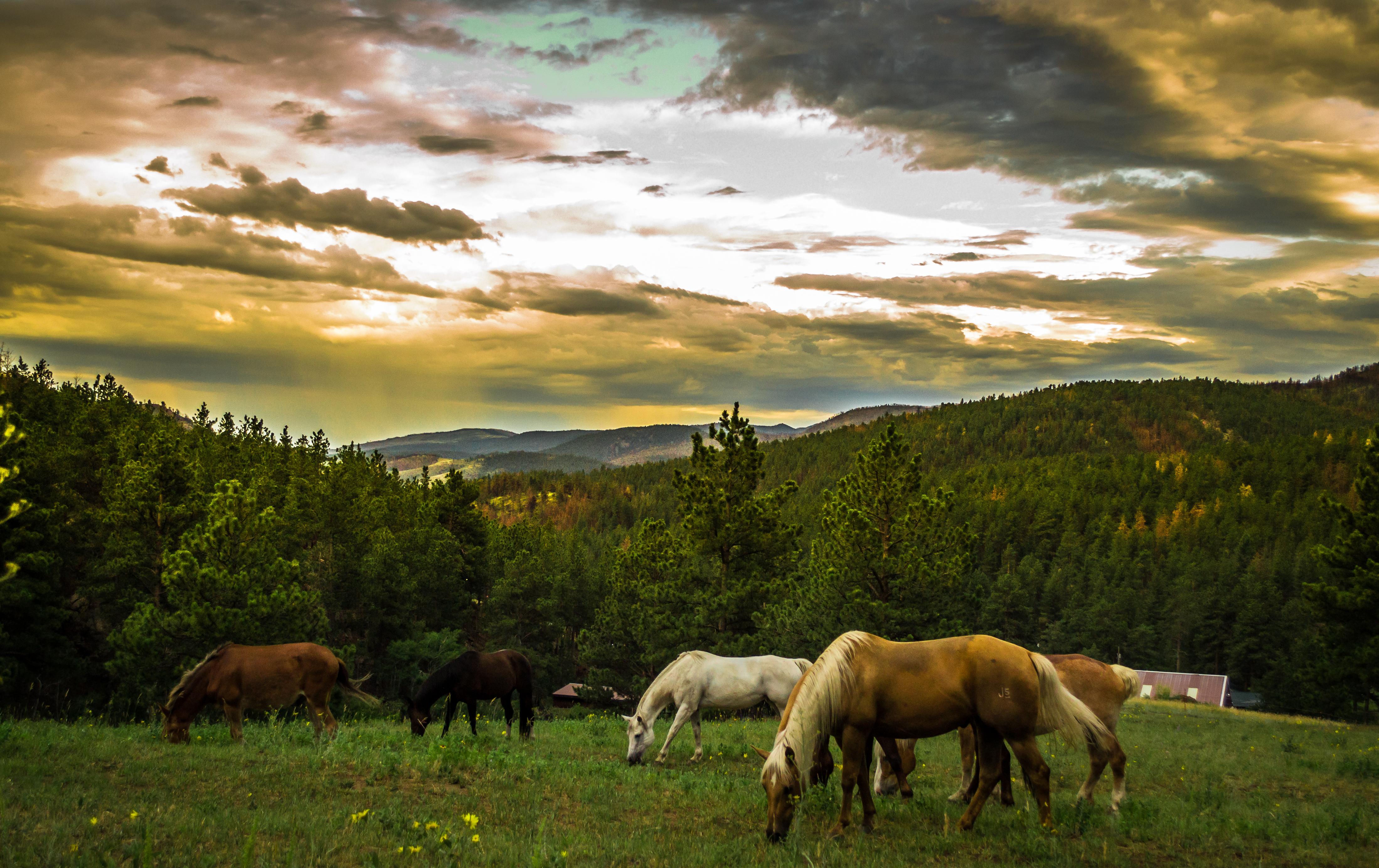 Images Gratuites : Paysage, La Nature, Forêt, Herbe